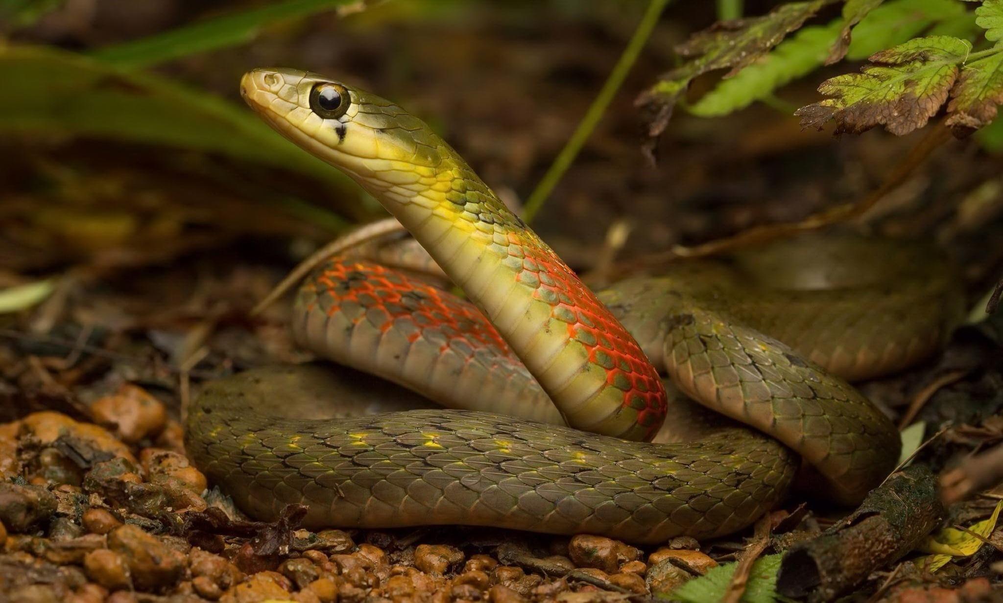 понятно, какая фото змей в природе ограничить доступ