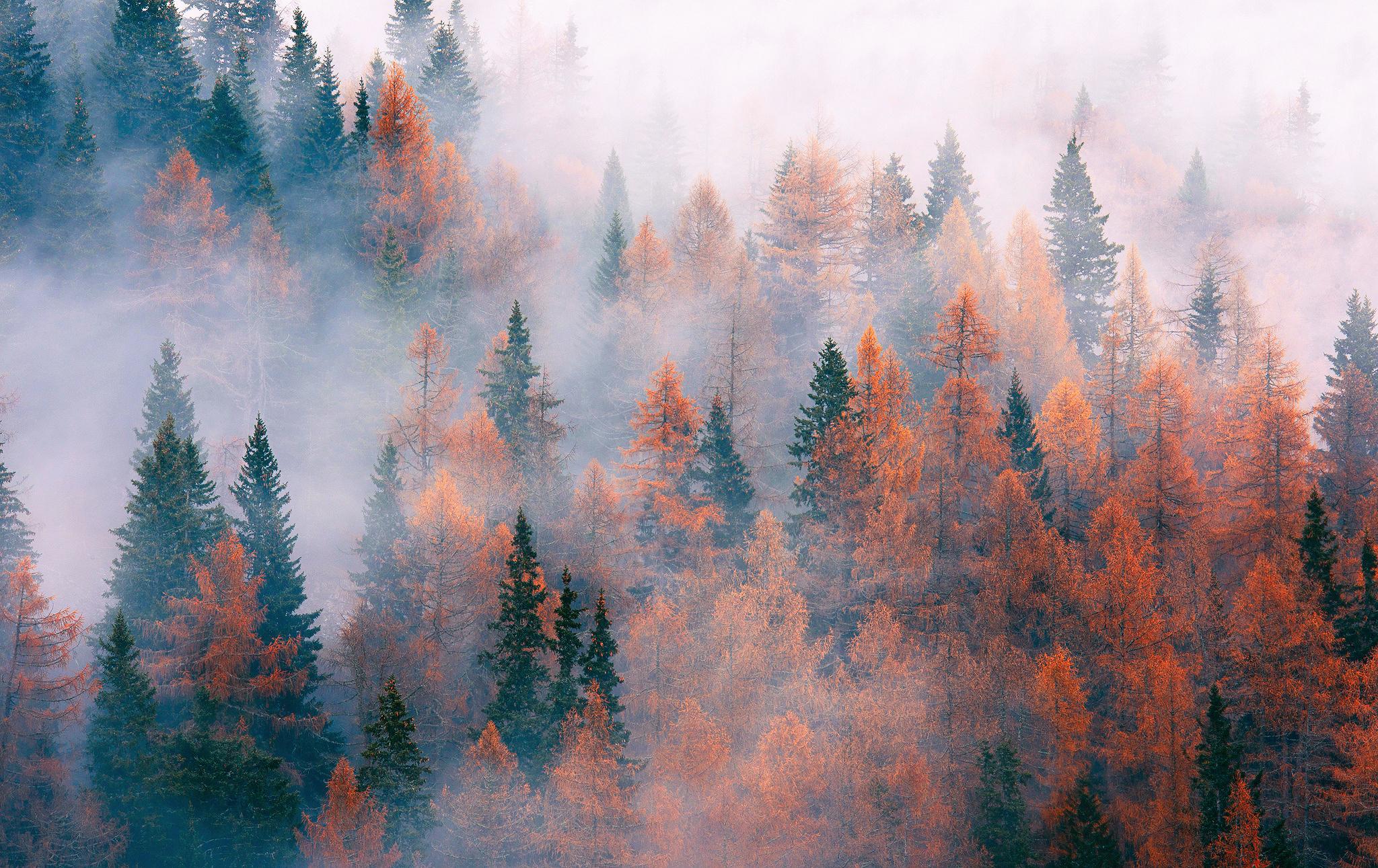 другие вопросы фон туманный лес гребешок аккуратно прочешите