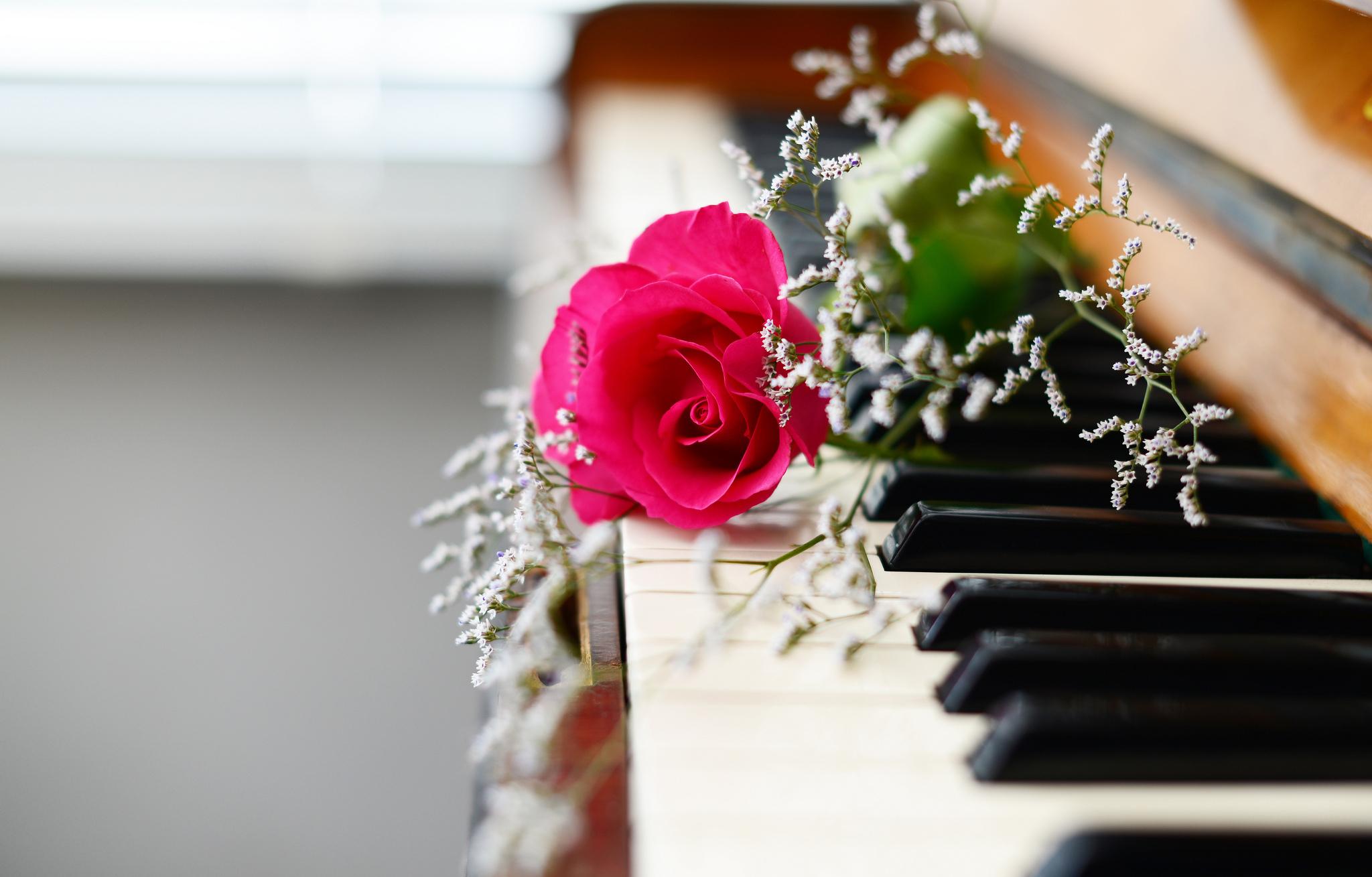 Нарисованые, музыкальная открытка цветочек