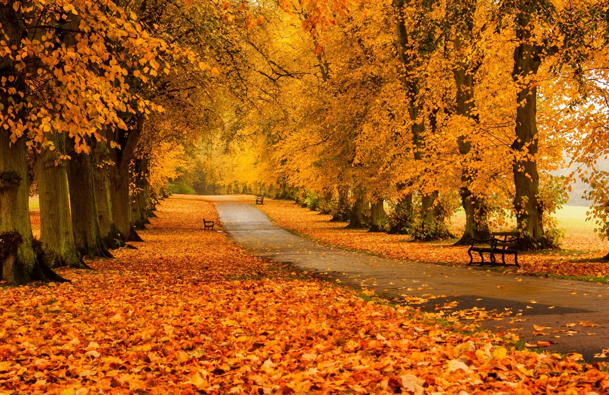 фото картинок золотой осени последние