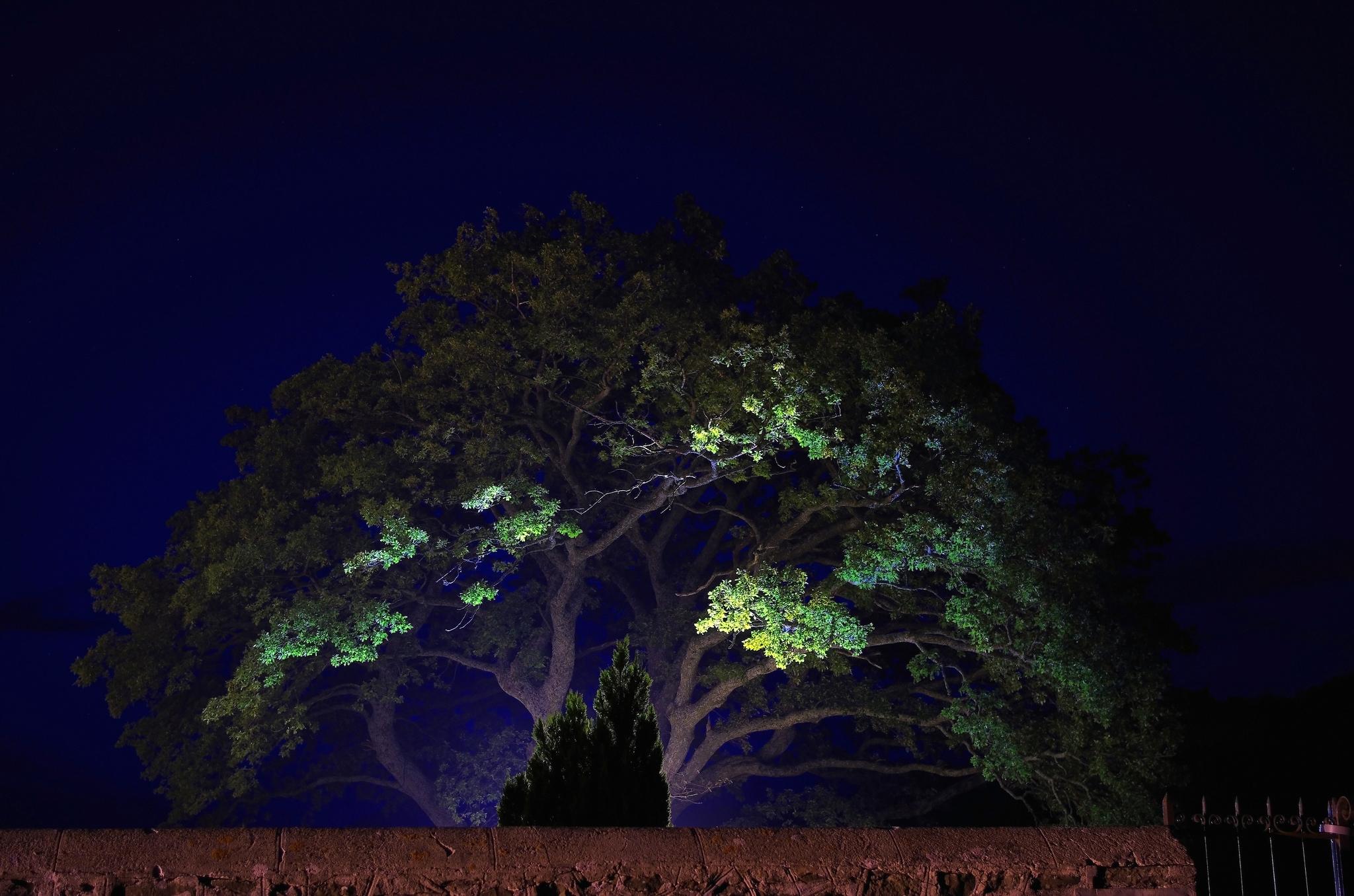 моя картинки деревьев ночью прозвучала центральном телевидении