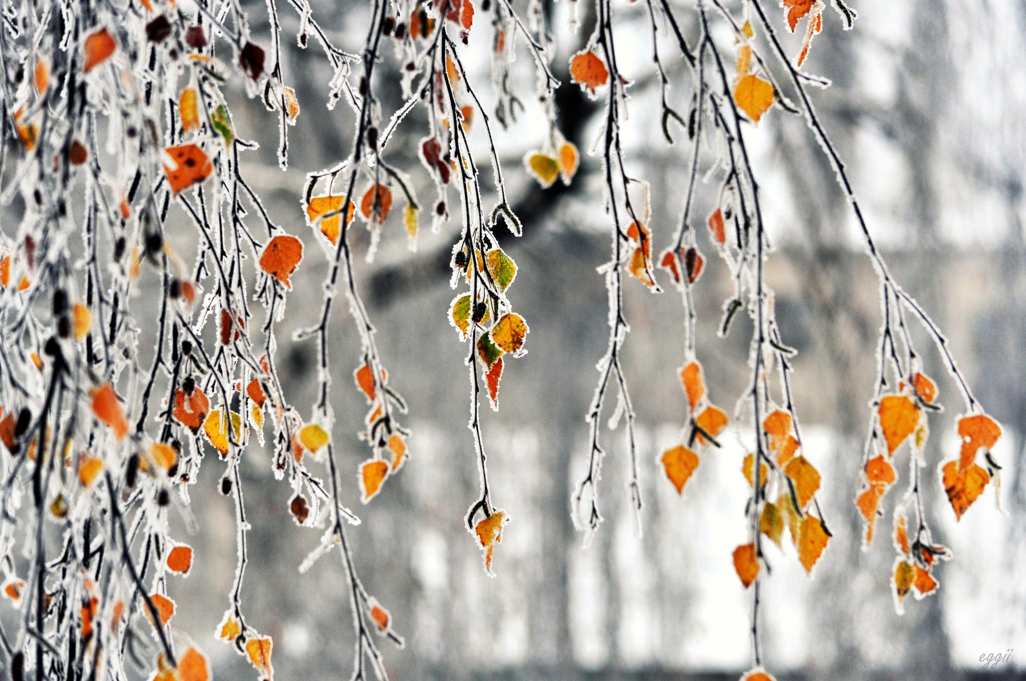 снег деревья желтые  № 442297 без смс