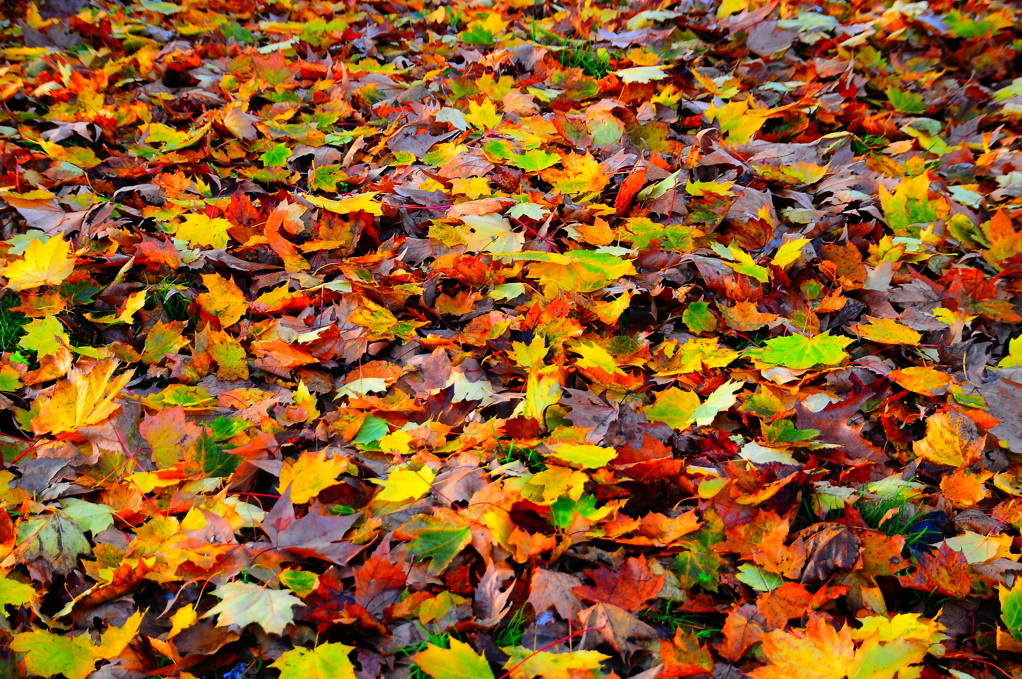 Картинки осень цветные