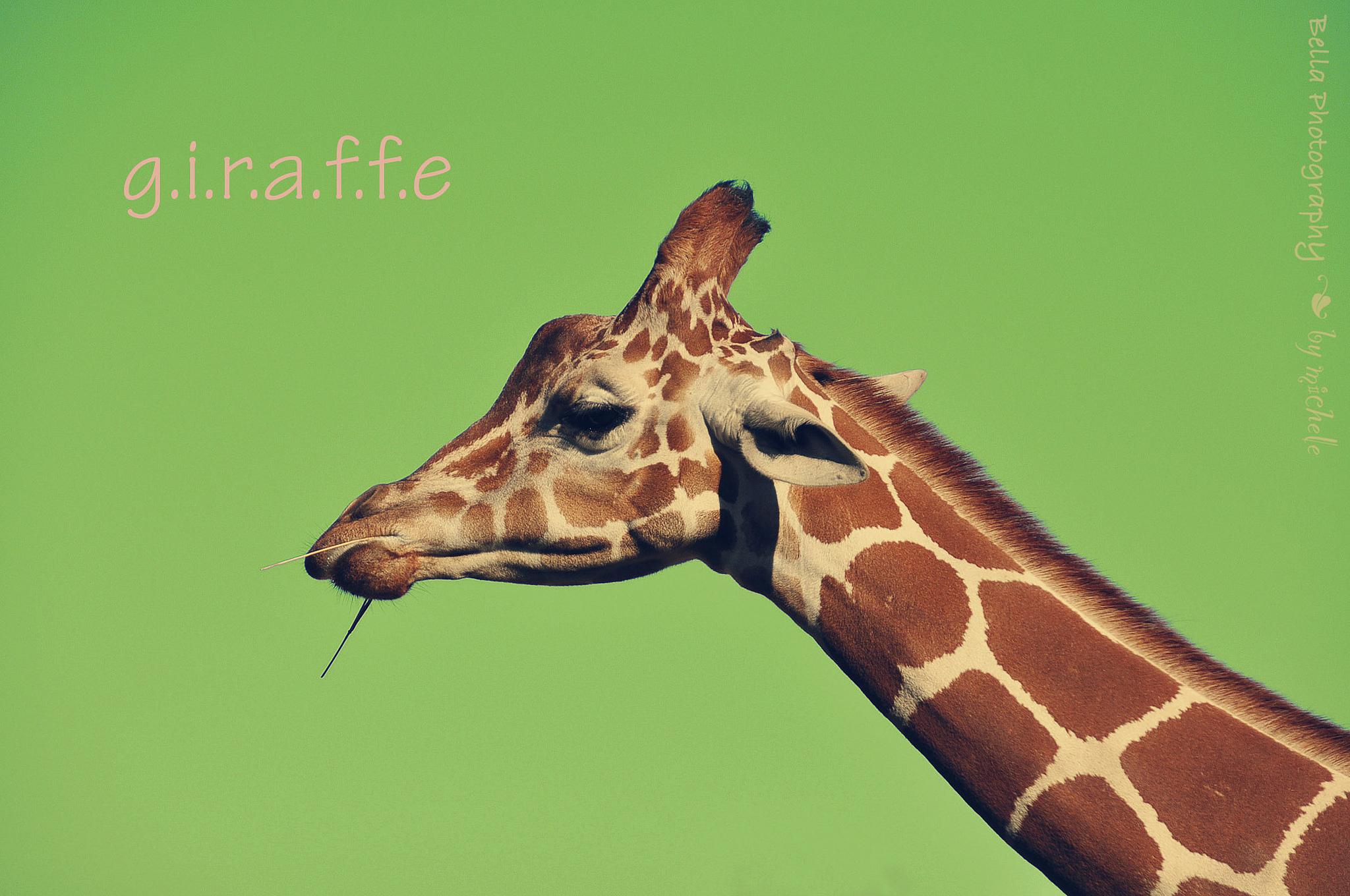Жираф испугался  № 3895639 загрузить