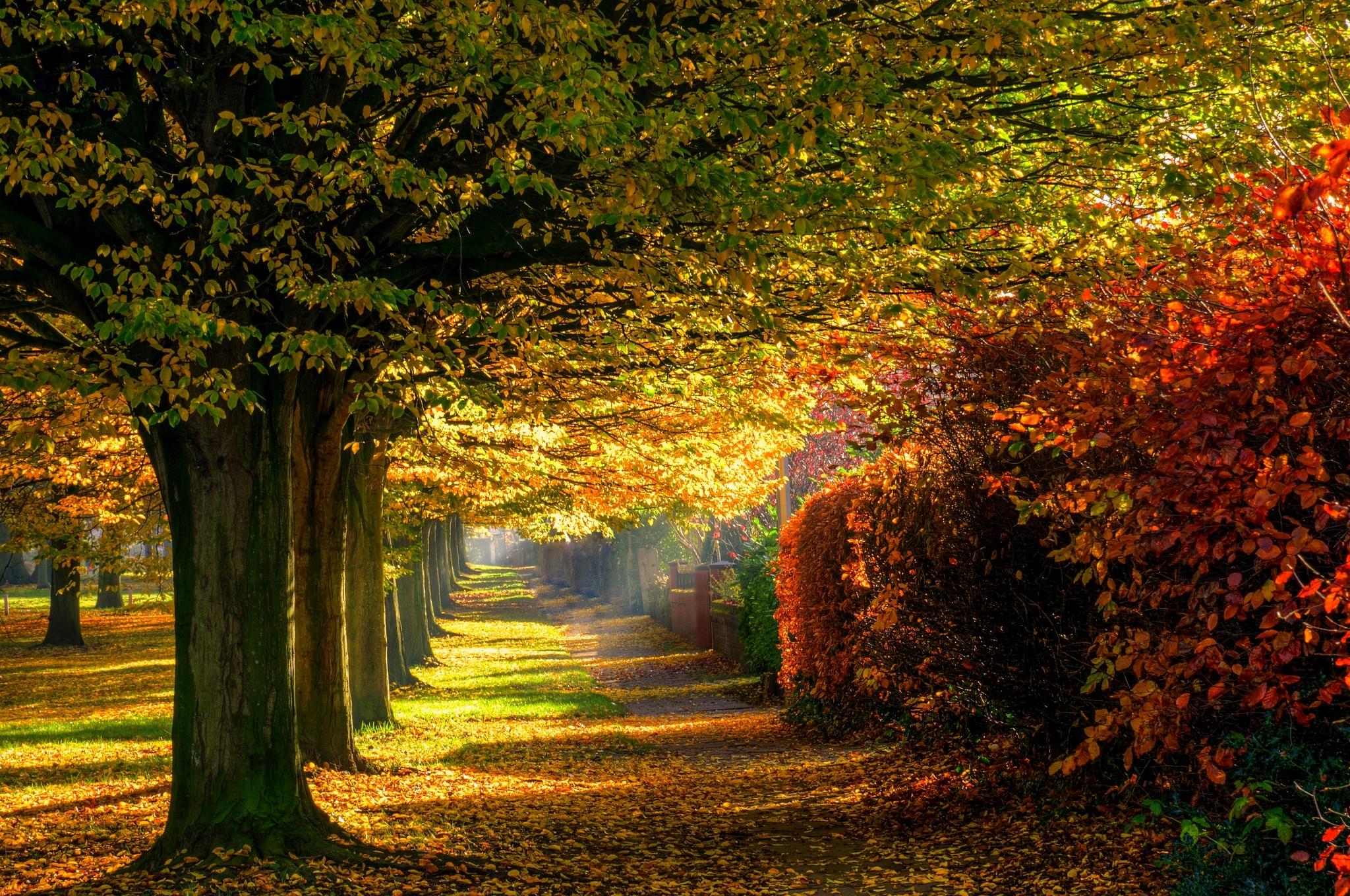 деревья парк осень роща  № 3186138  скачать