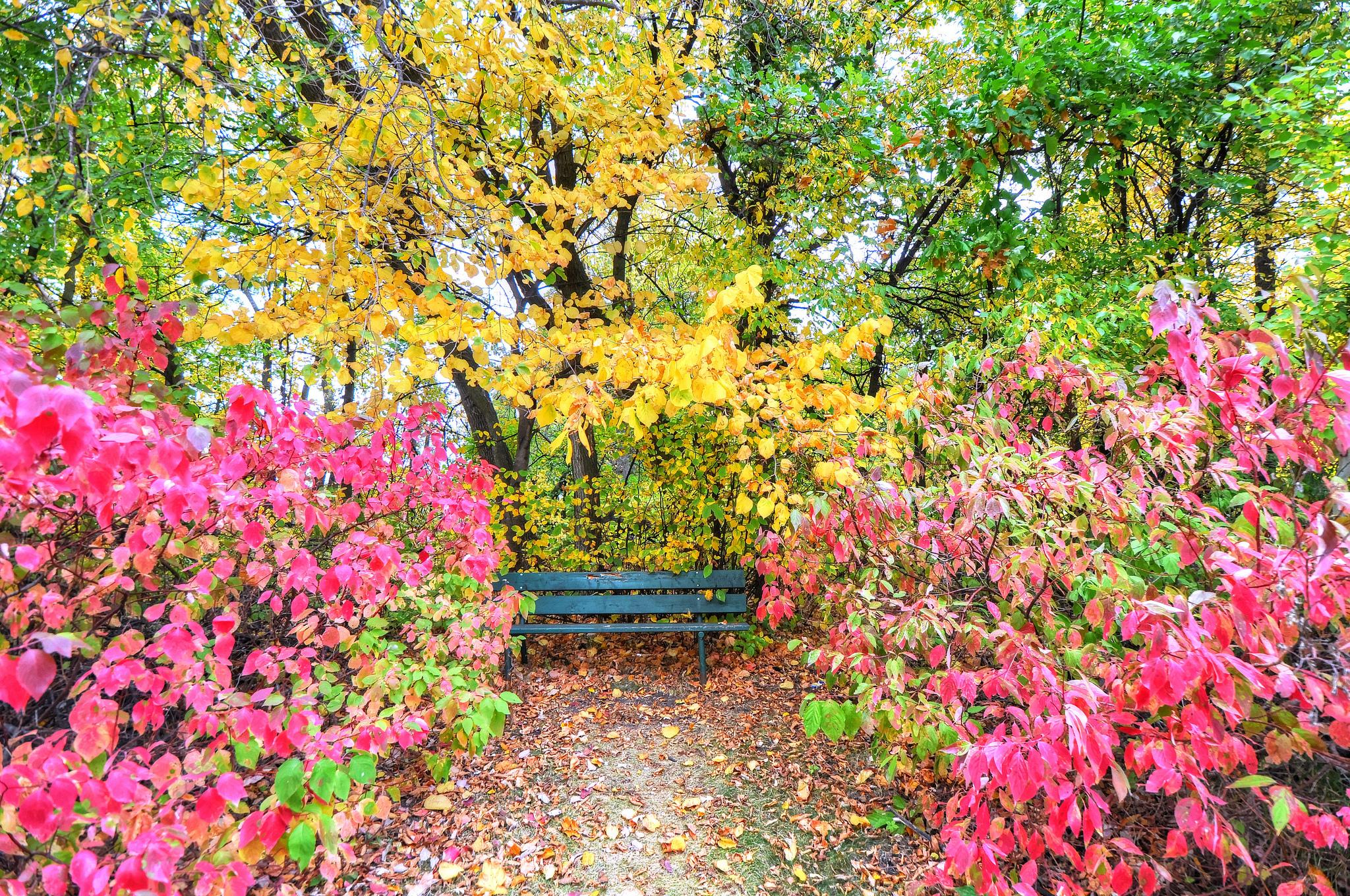 картинки осени кустарники бывают диваны
