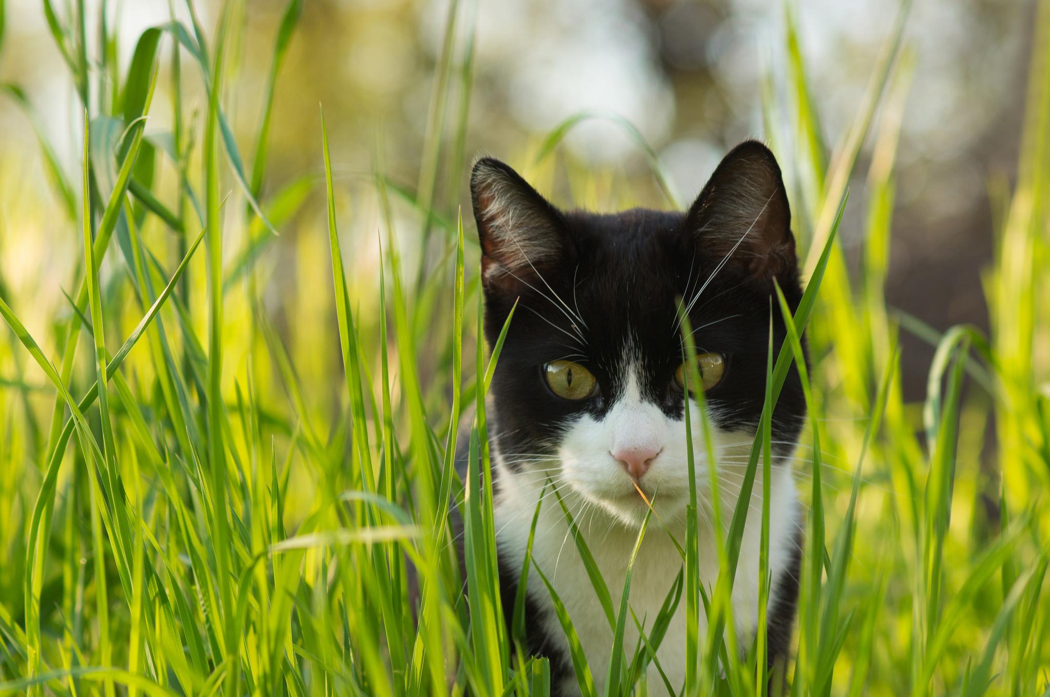 Котенок в траве  № 2954157  скачать