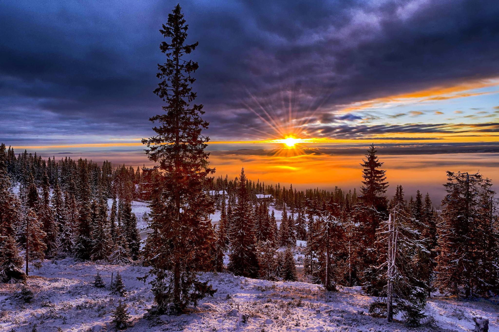 рассвет и елка летом фото
