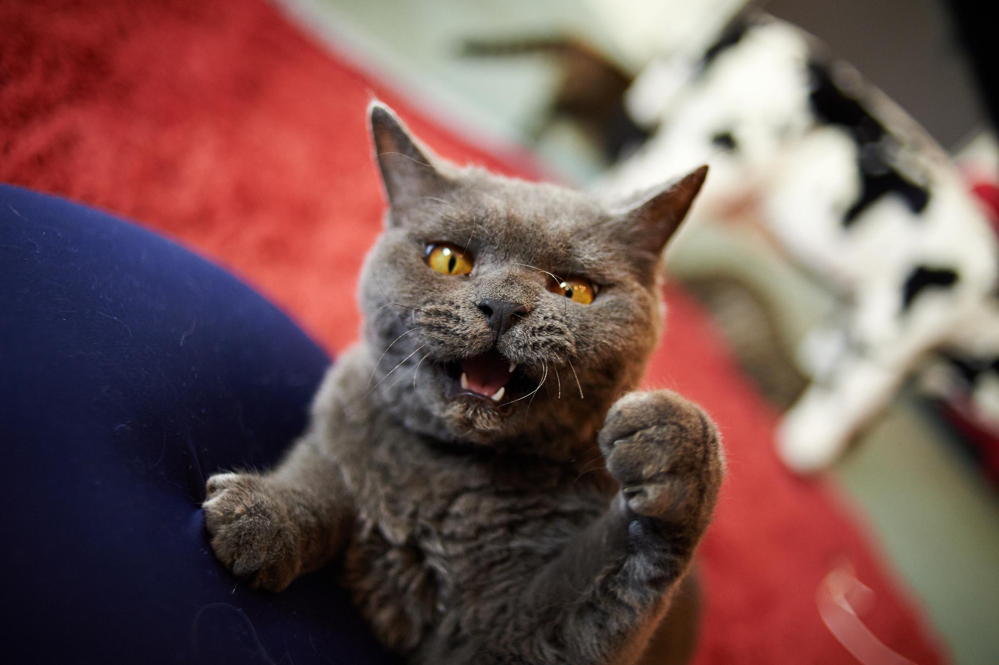 картинки про злого кота