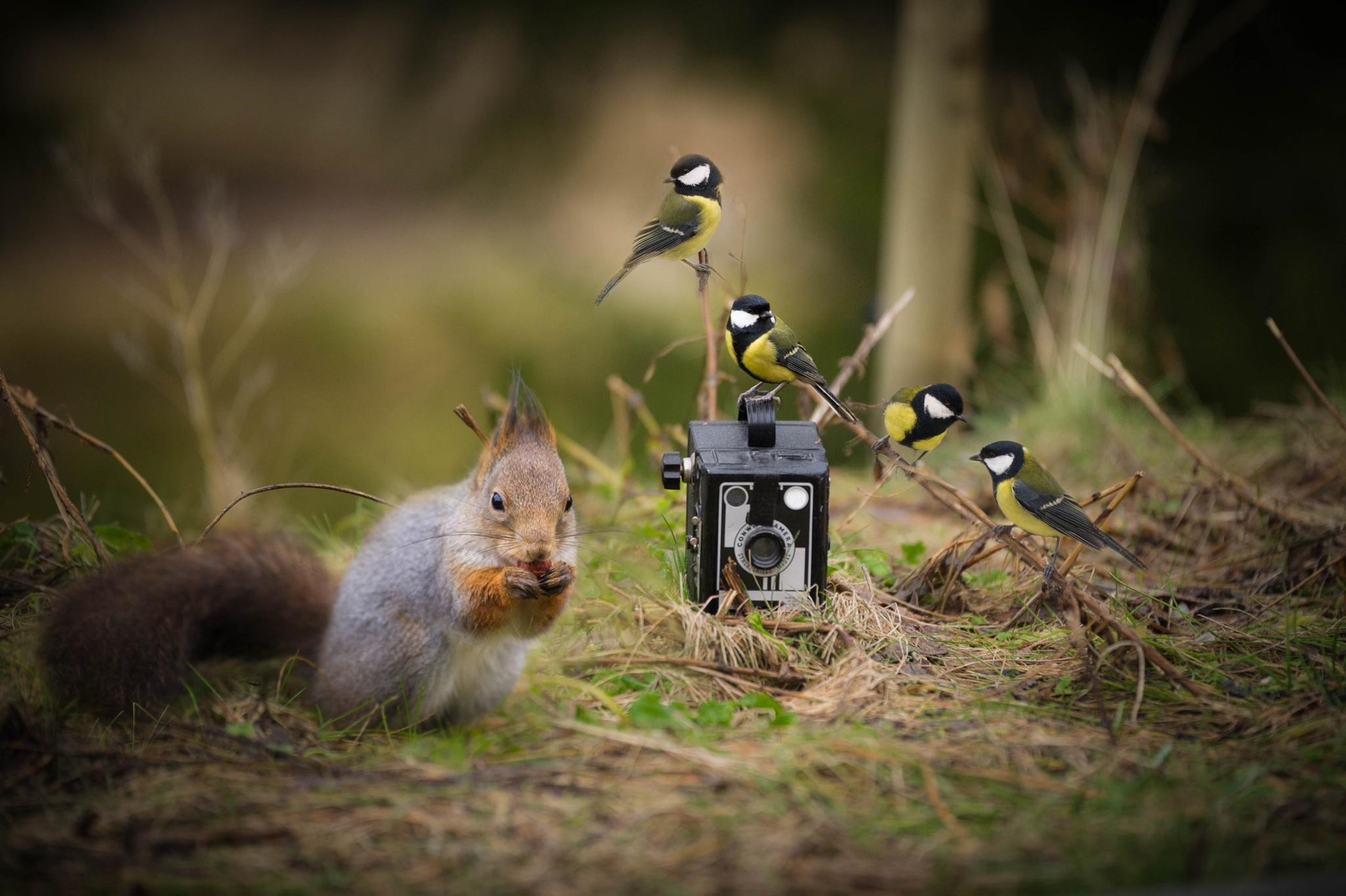 необходимо взгляд на птиц глазами фотографа самого большого