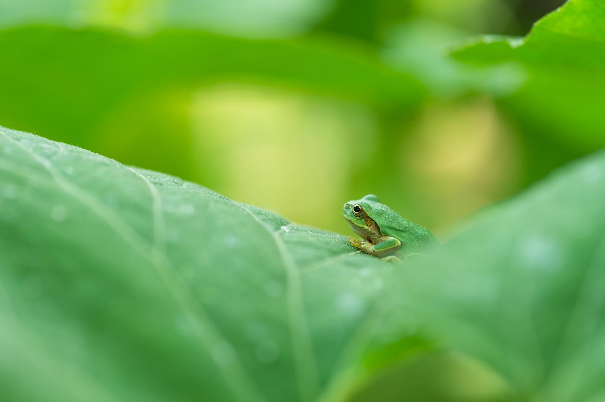 Лягушка листья  № 2931407 загрузить