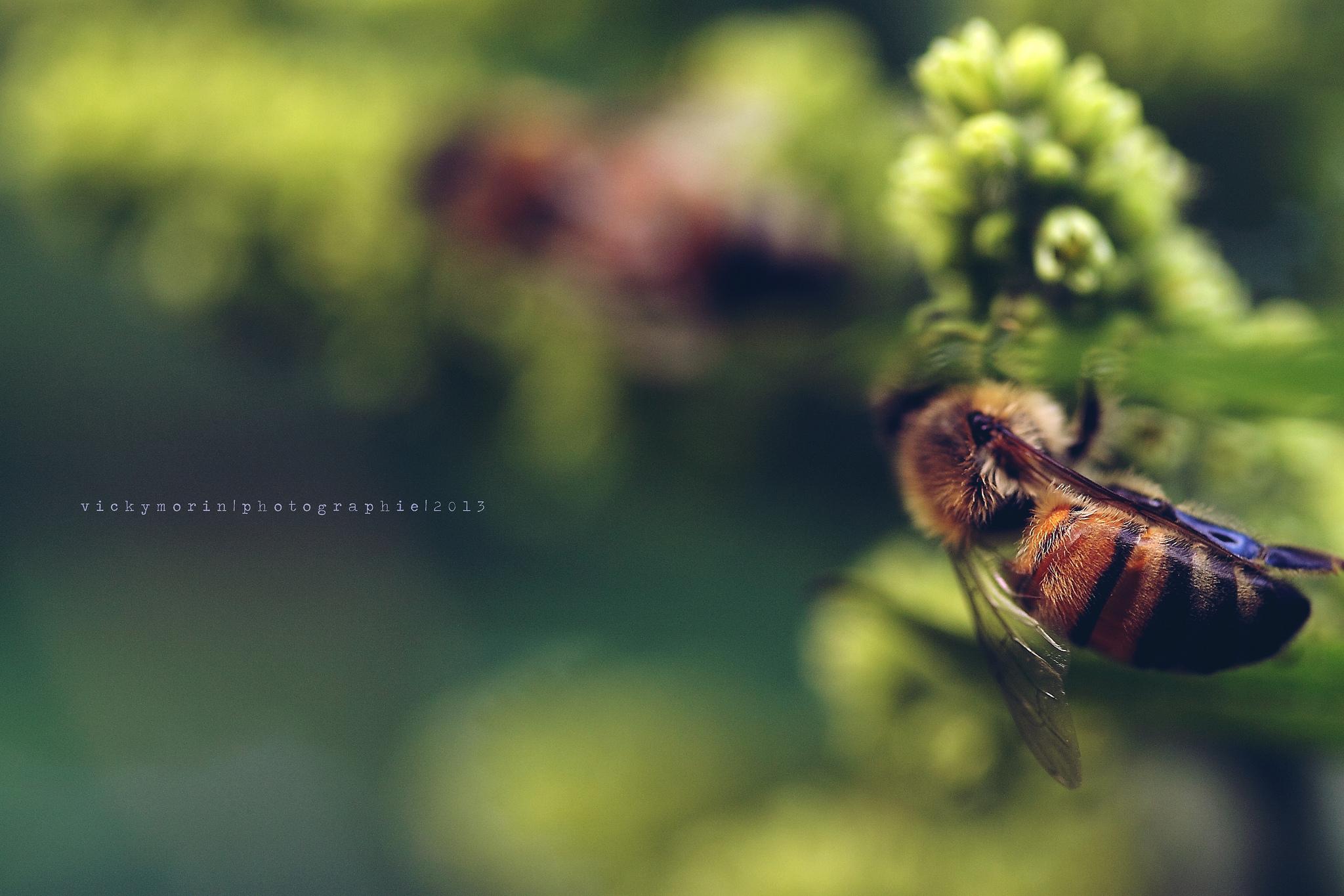 природа цветы насекомое пчела  № 3105965  скачать