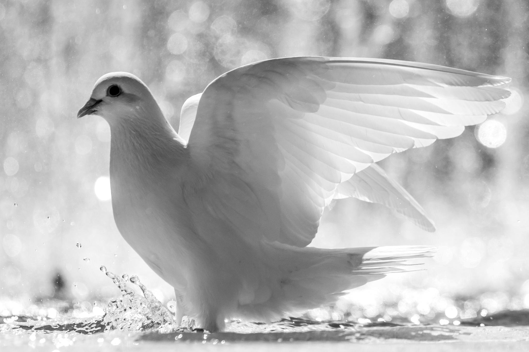 природа белые птицы ветка голуби  № 592616 загрузить