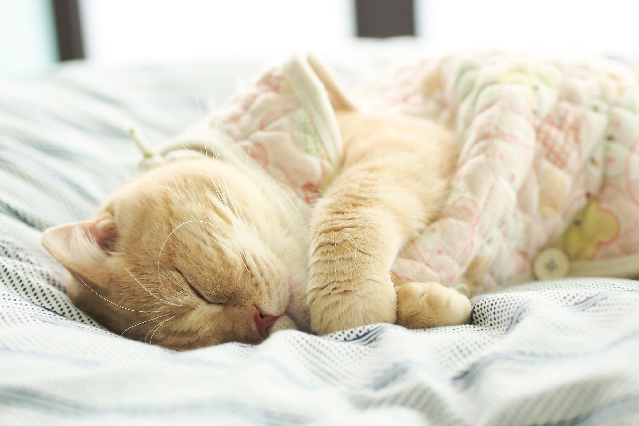 Кошка спит в кровати картинка