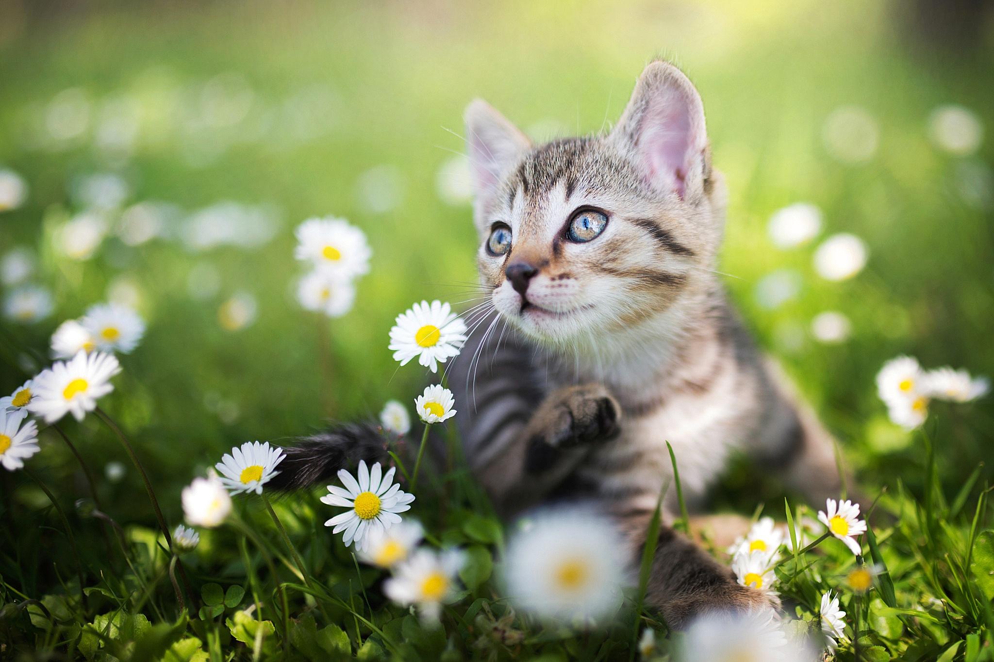 Котенок в мелкой траве  № 2954046 без смс
