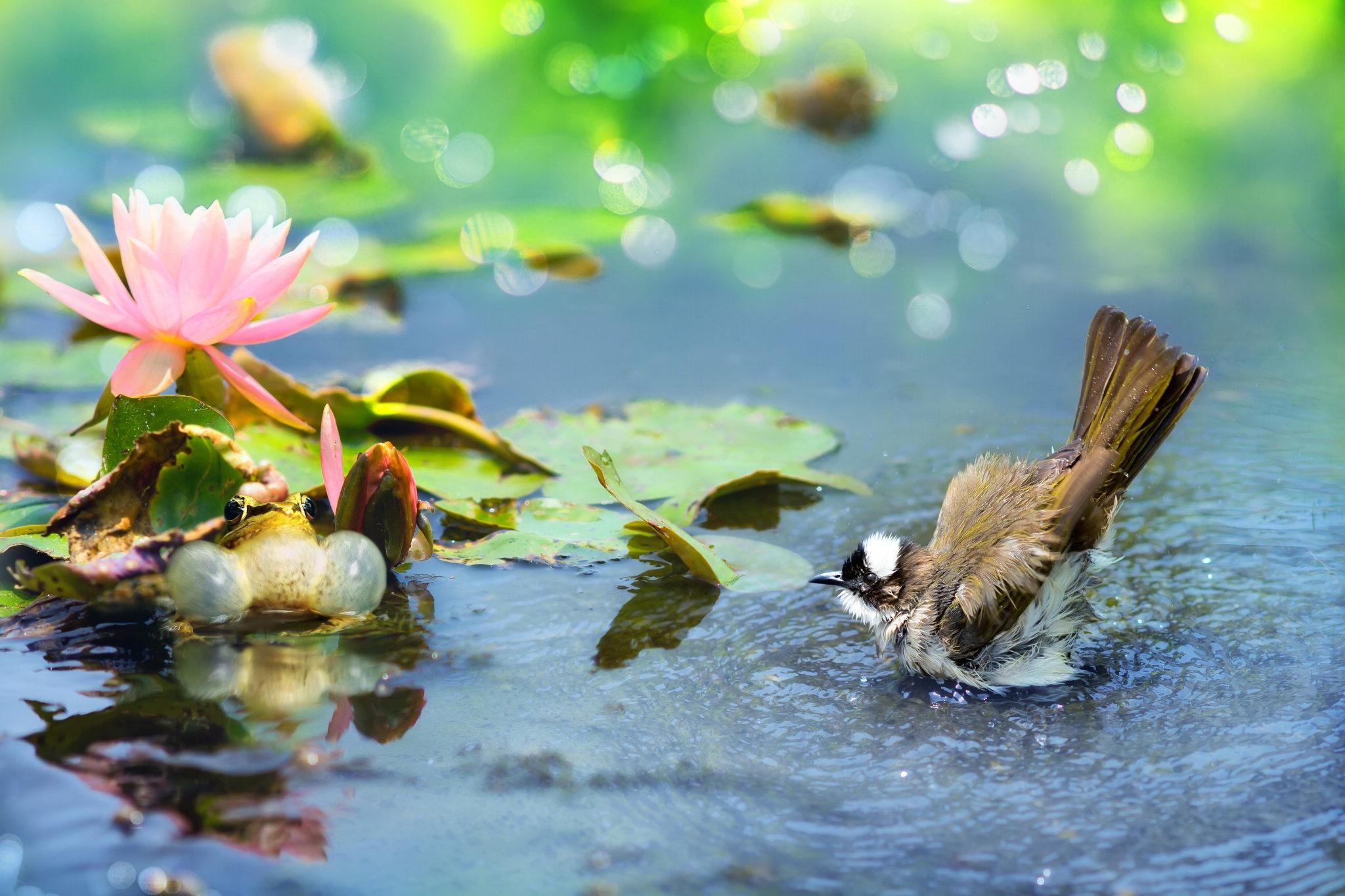 Картинки, доброе утро очень красивые открытки природой и птицами