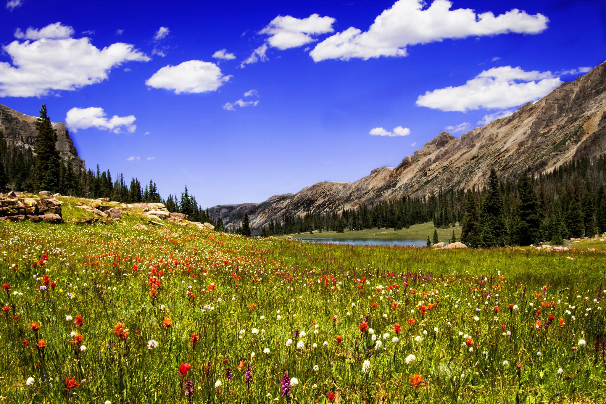 Облака, трава, цветы, озеро  № 1963092 бесплатно