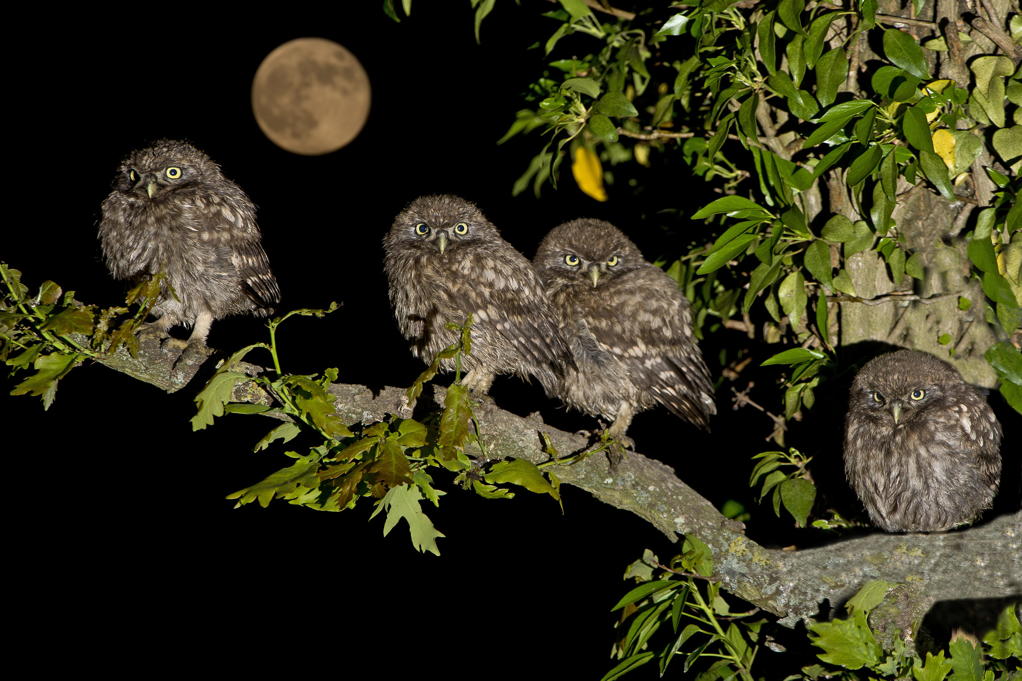 самый картинки птицы ночью каждой съемкой грамотно