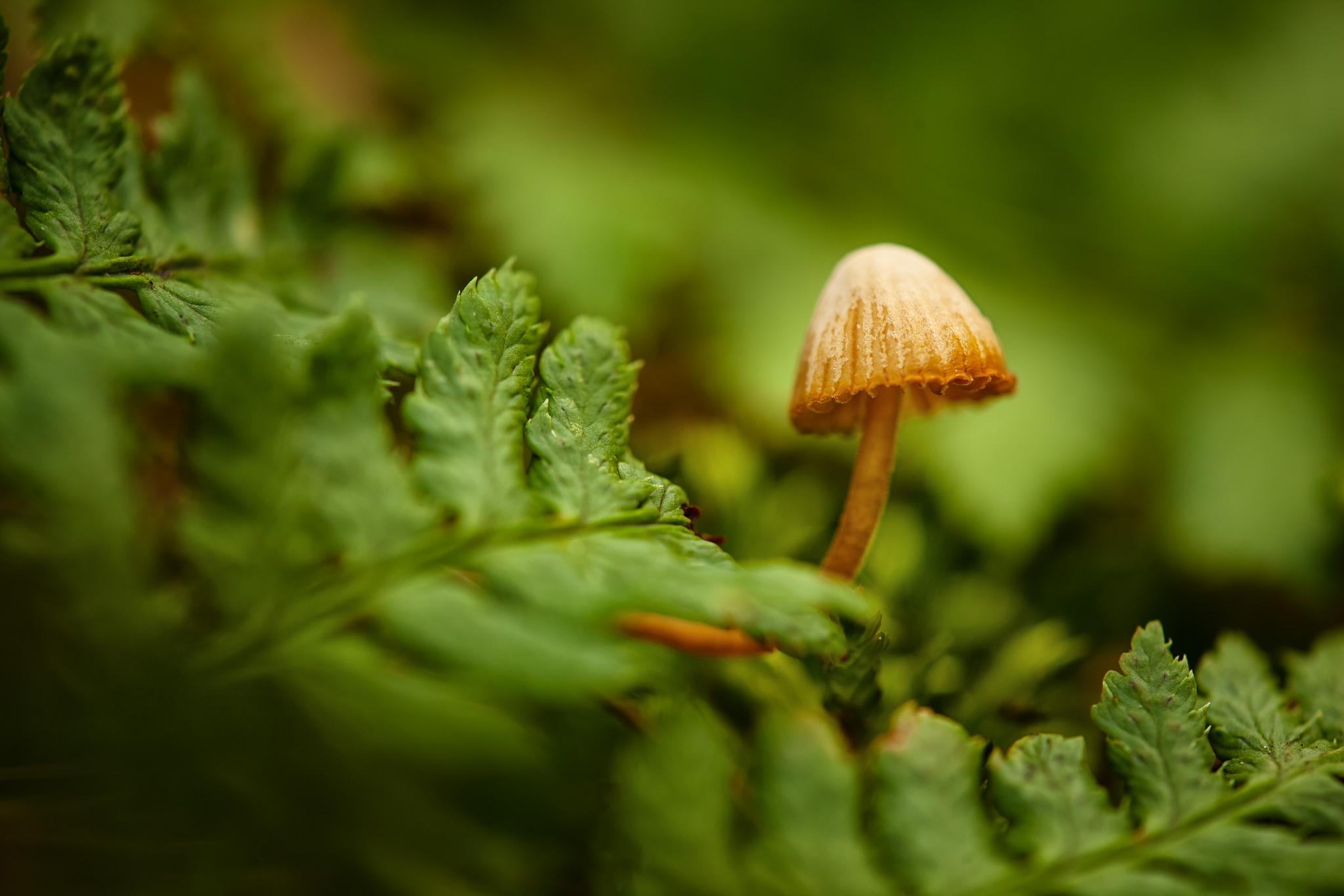 Прозрачный гриб  № 3337724  скачать