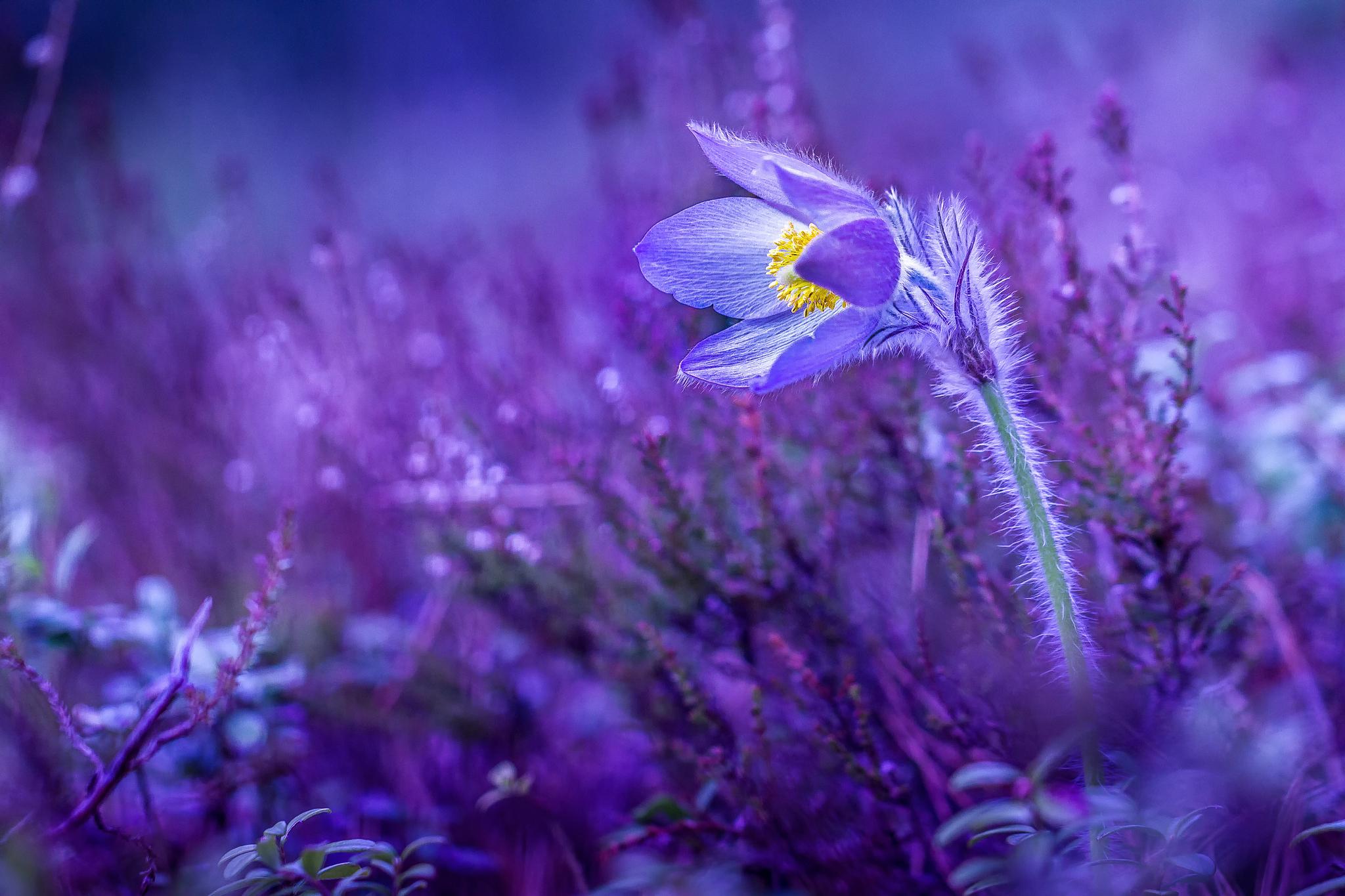 отдыха красивые картинки весенние цветы в ночи следующем квартале седан