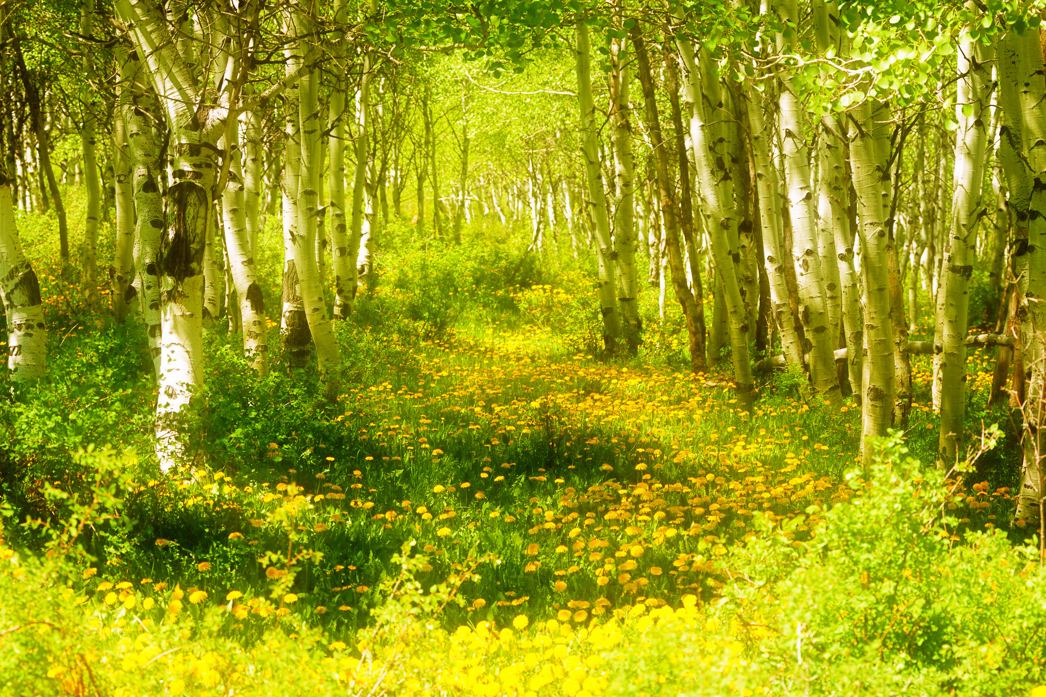 весной в лесу  № 113953 загрузить