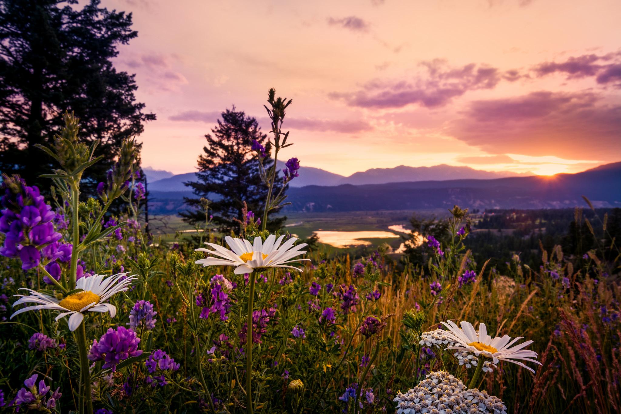 закат небо полевые растения  № 963493  скачать