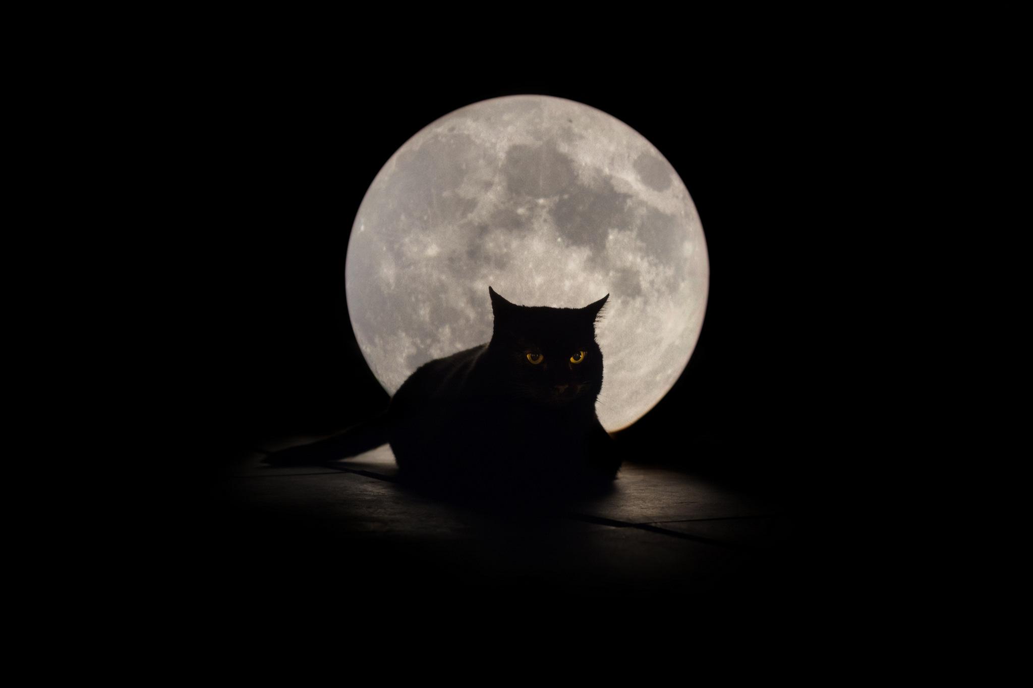 Фото кошка полнолуние