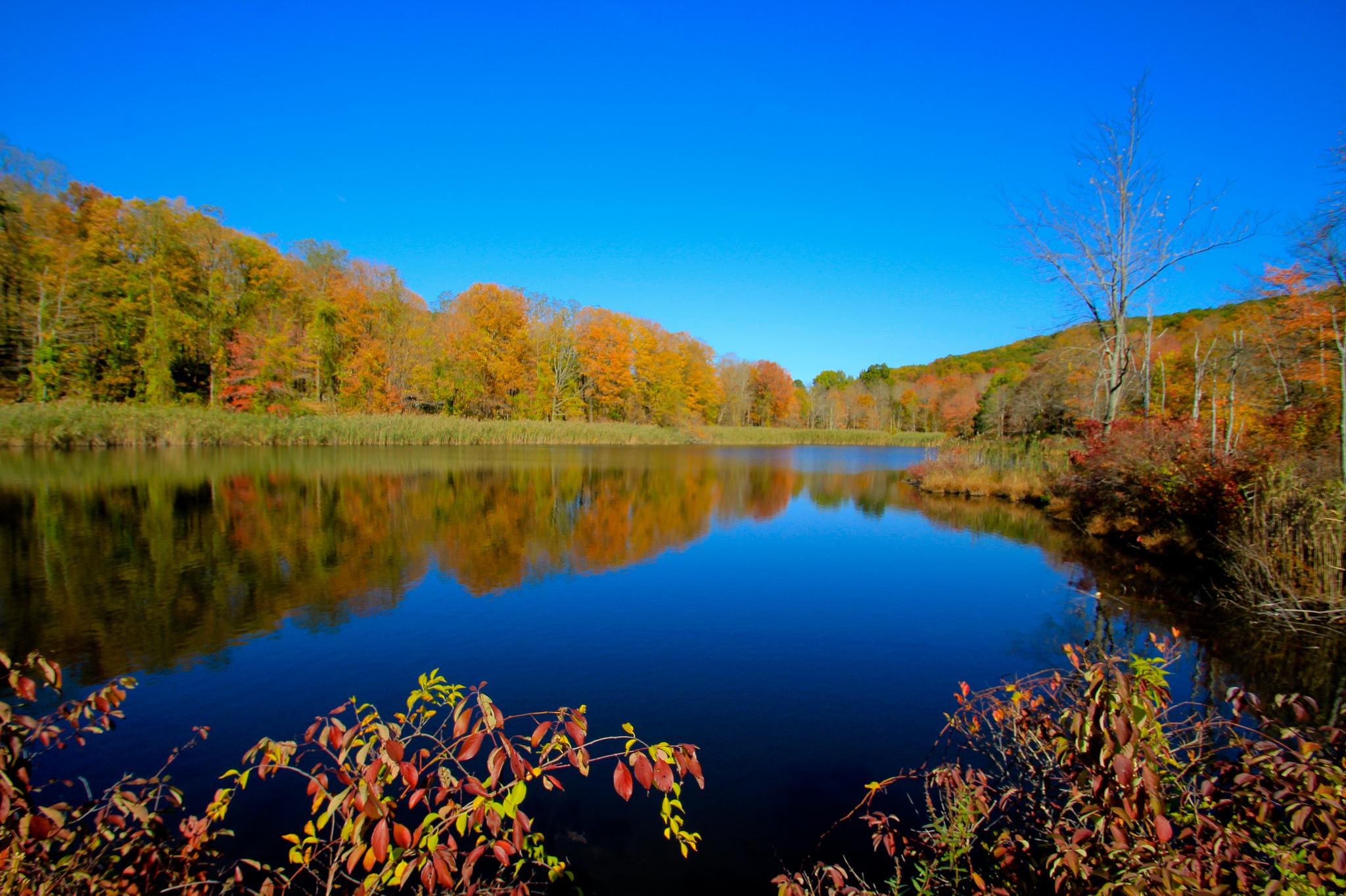 деревья небо озеро  № 3165873 загрузить