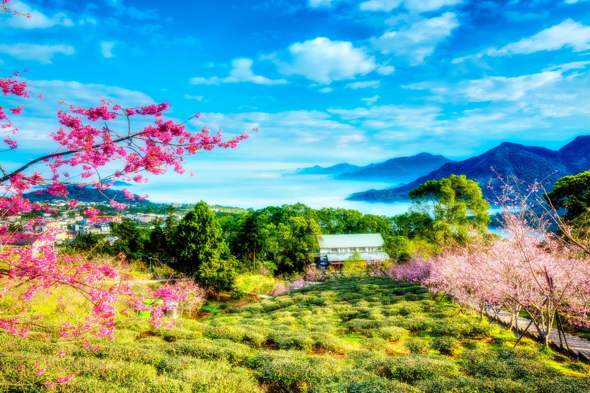 Лето на китайском картинки