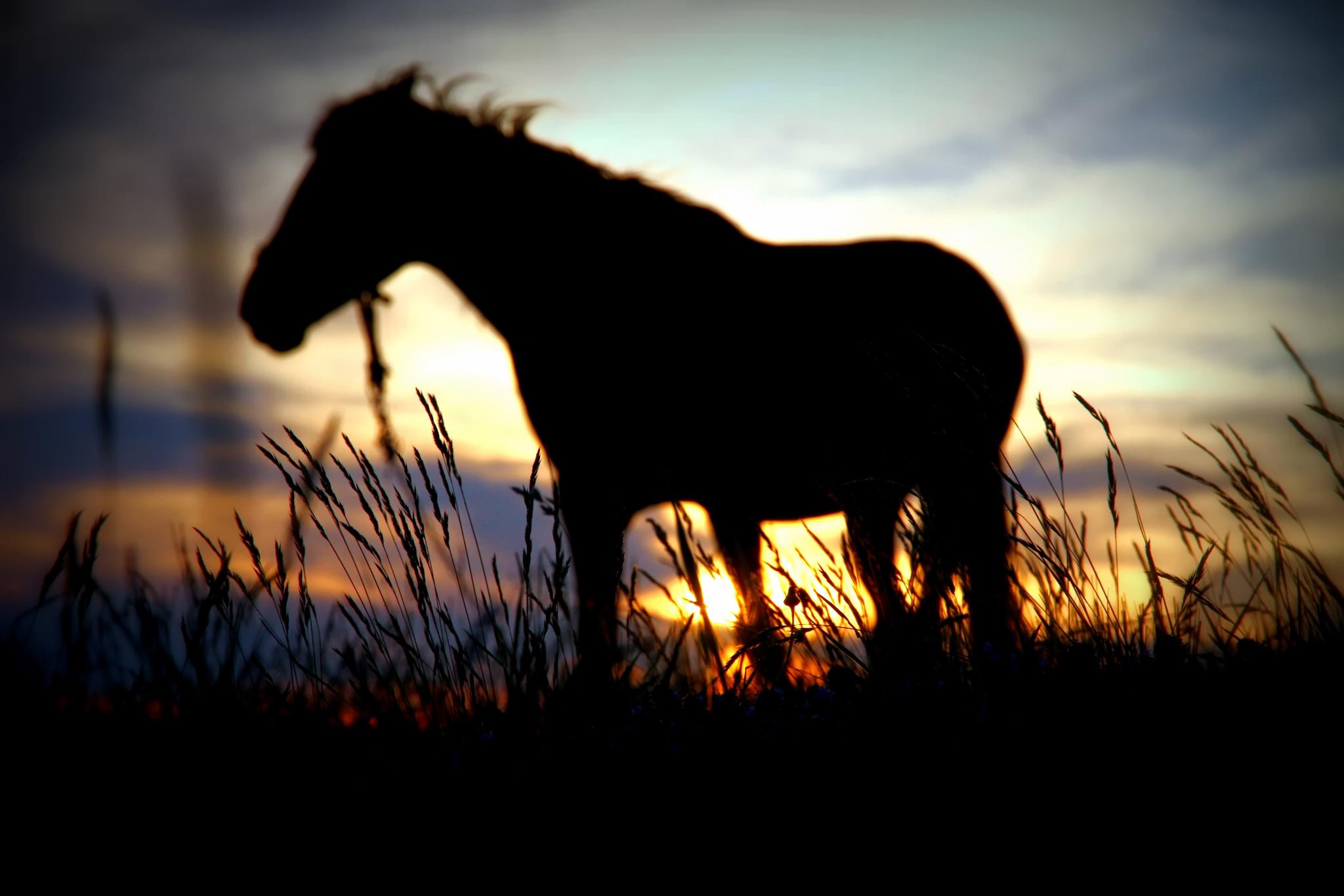 лошадь, трава, закат  № 2655 загрузить