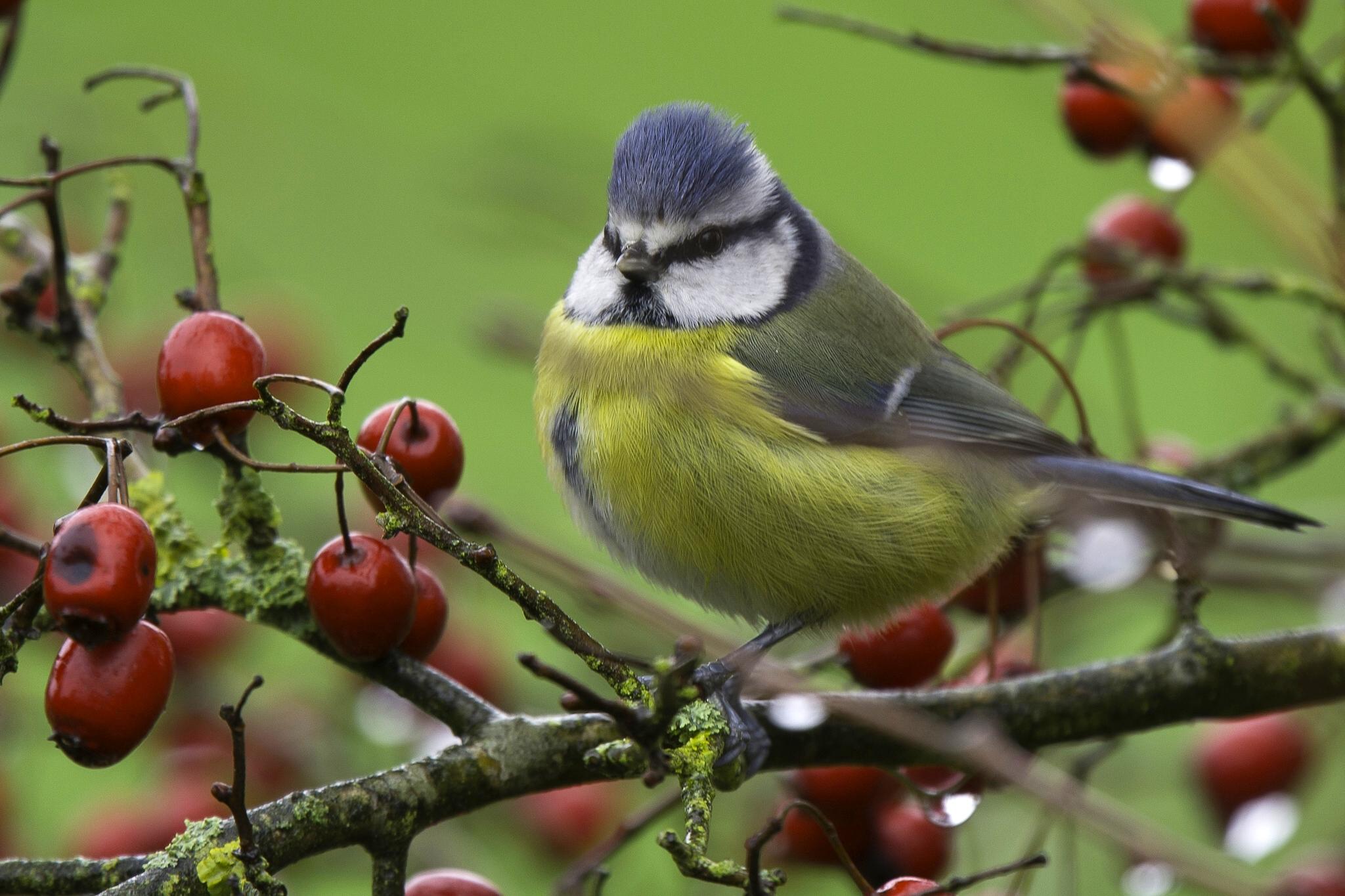 картинки птицы на ветвях зала создаст