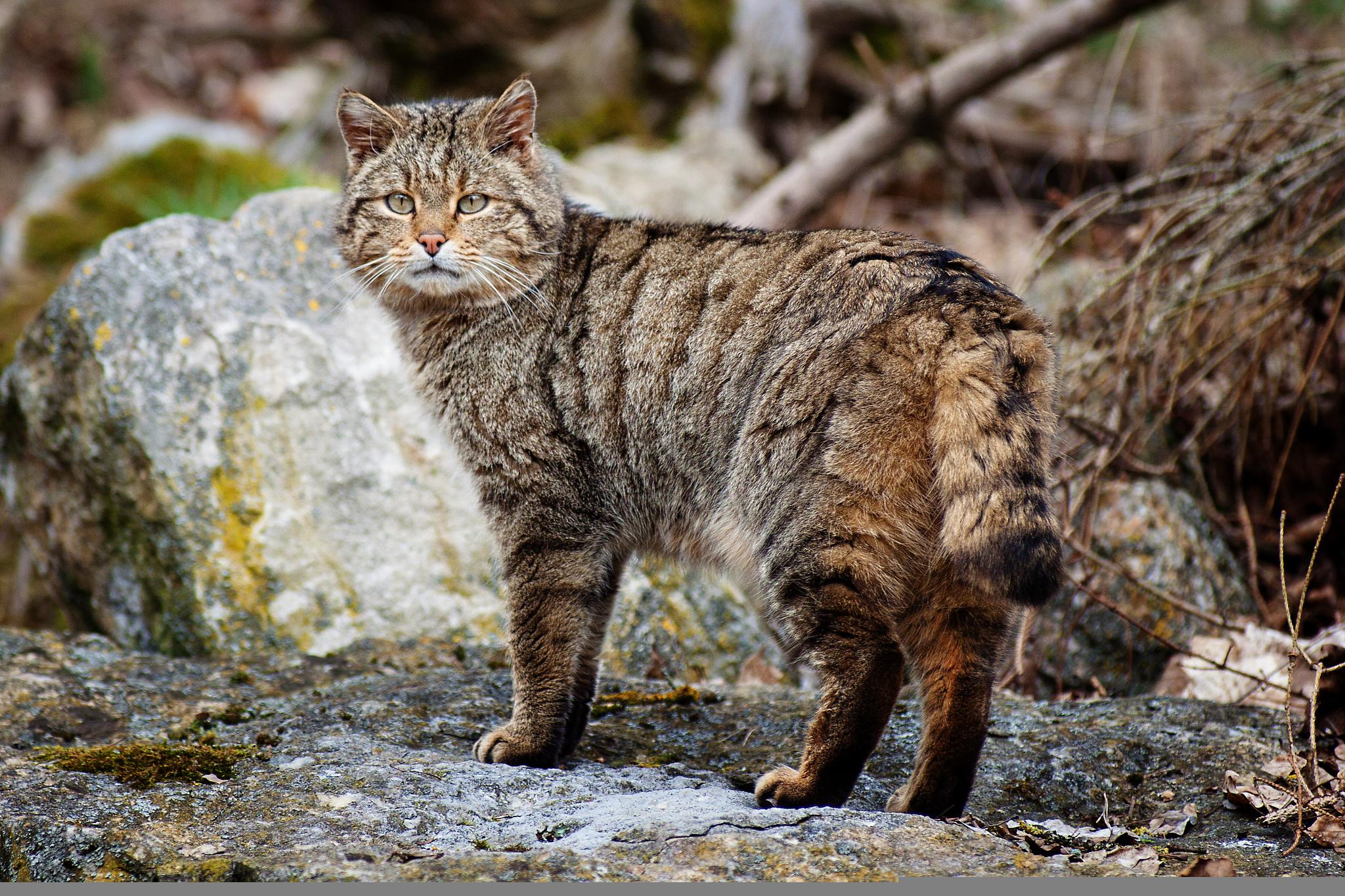 Кот на камушках  № 530476 бесплатно
