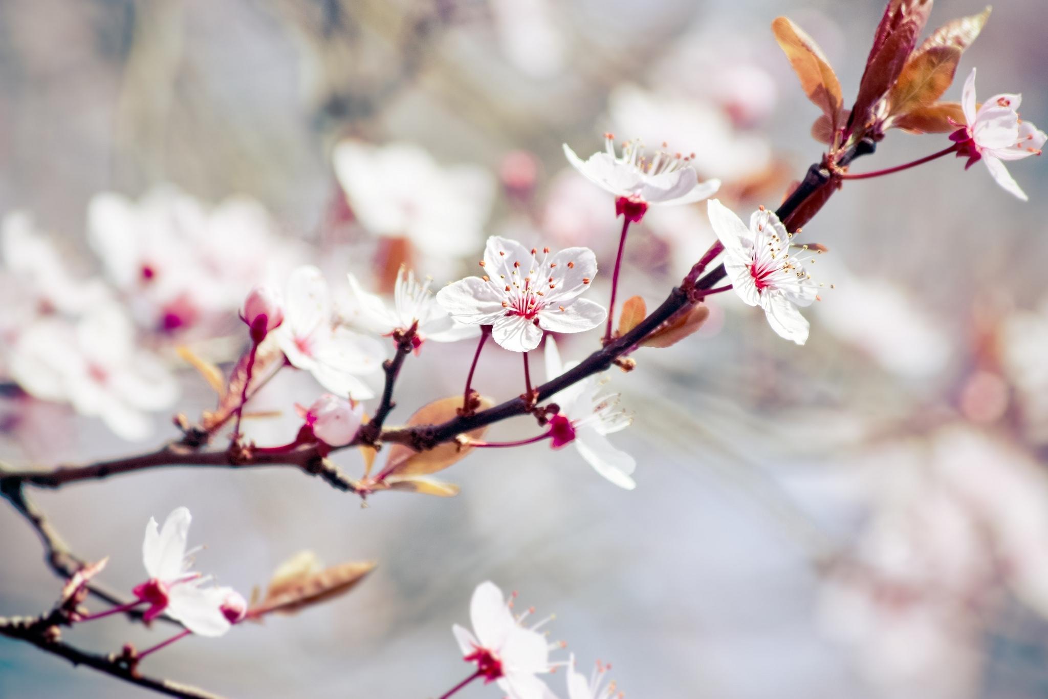 природа цветы листья  № 2053511 без смс