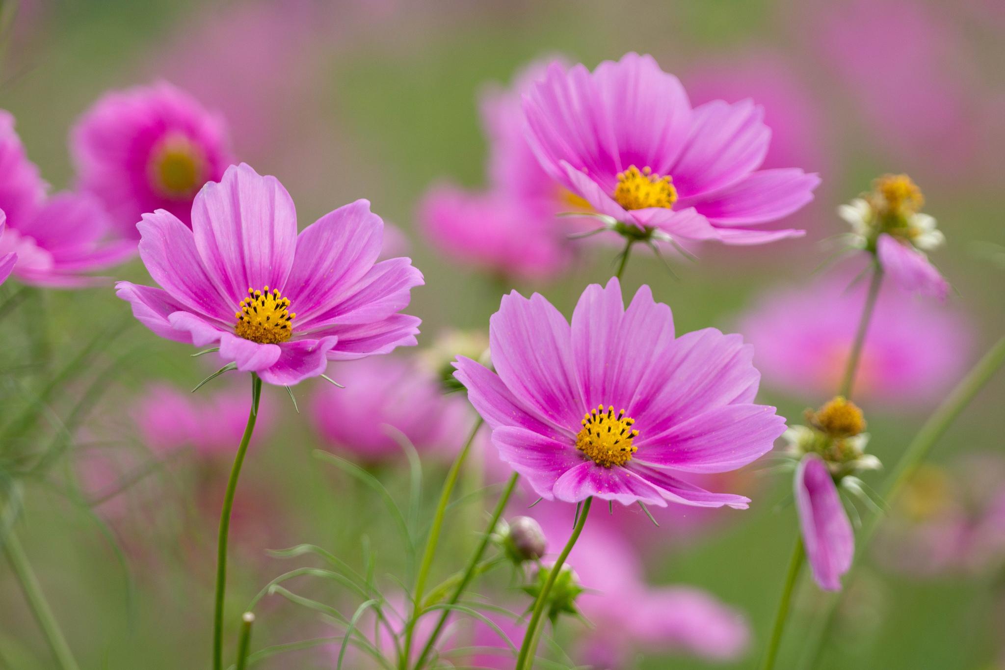 обои на телефон летние цветы подарочные