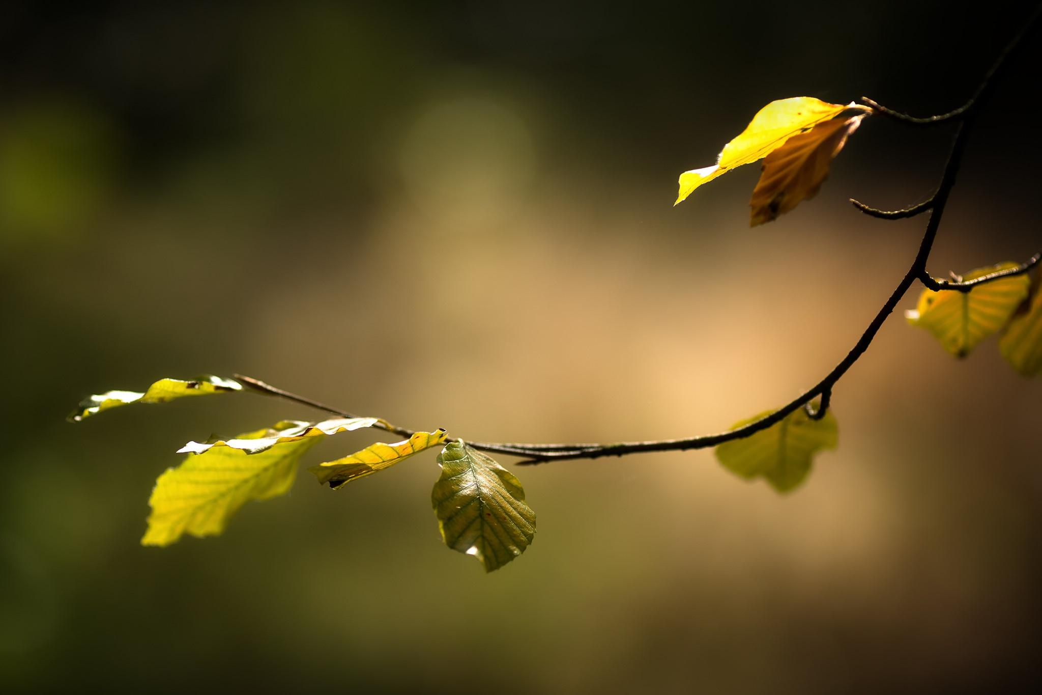 природа ветка листья nature branch leaves  № 2314 загрузить