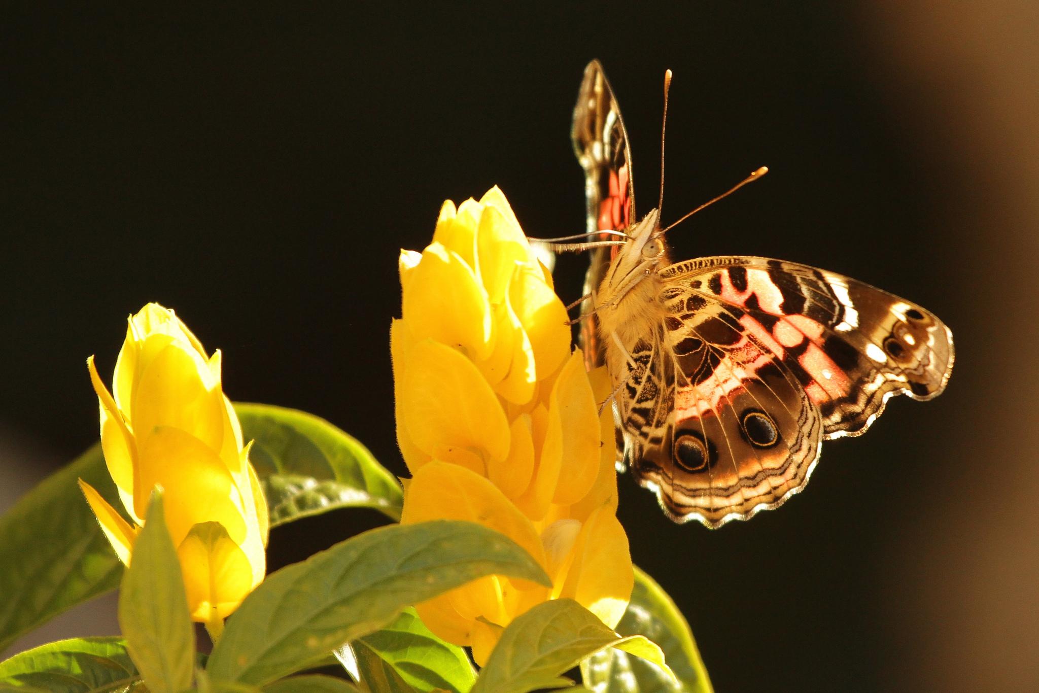 цветы,желтые,бабочка  № 664846 без смс