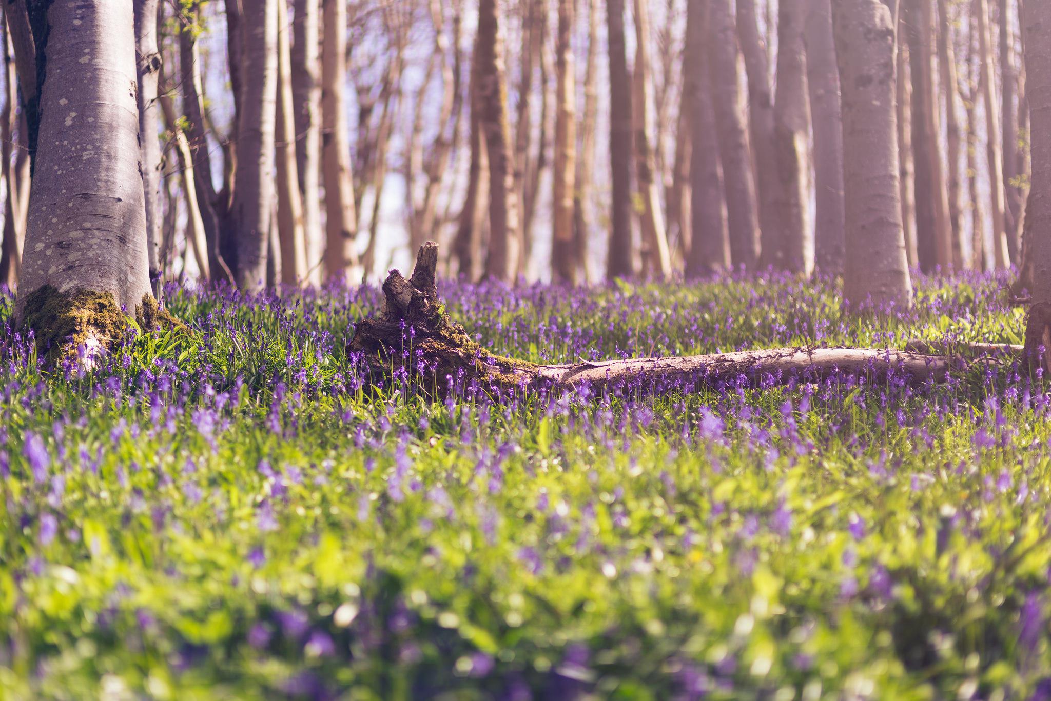 весной в лесу  № 113957 без смс