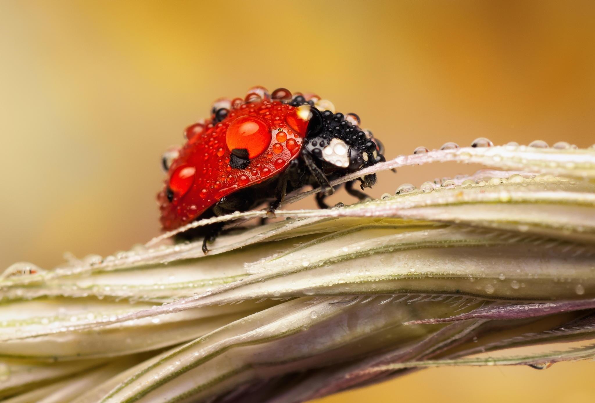 природа насекомое божья коровка цветок  № 3008153  скачать
