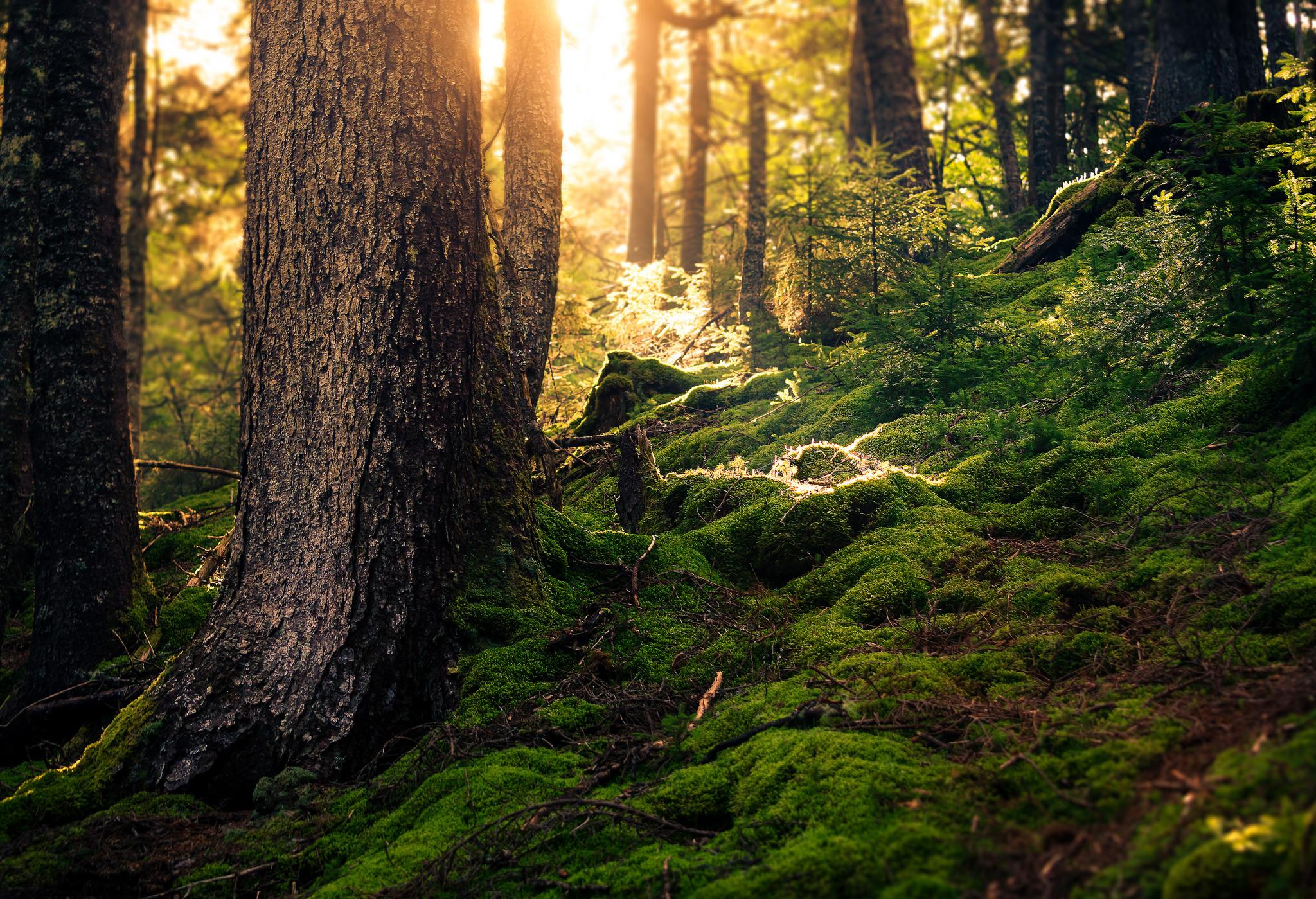 Фото лес лето мох солнечный свет