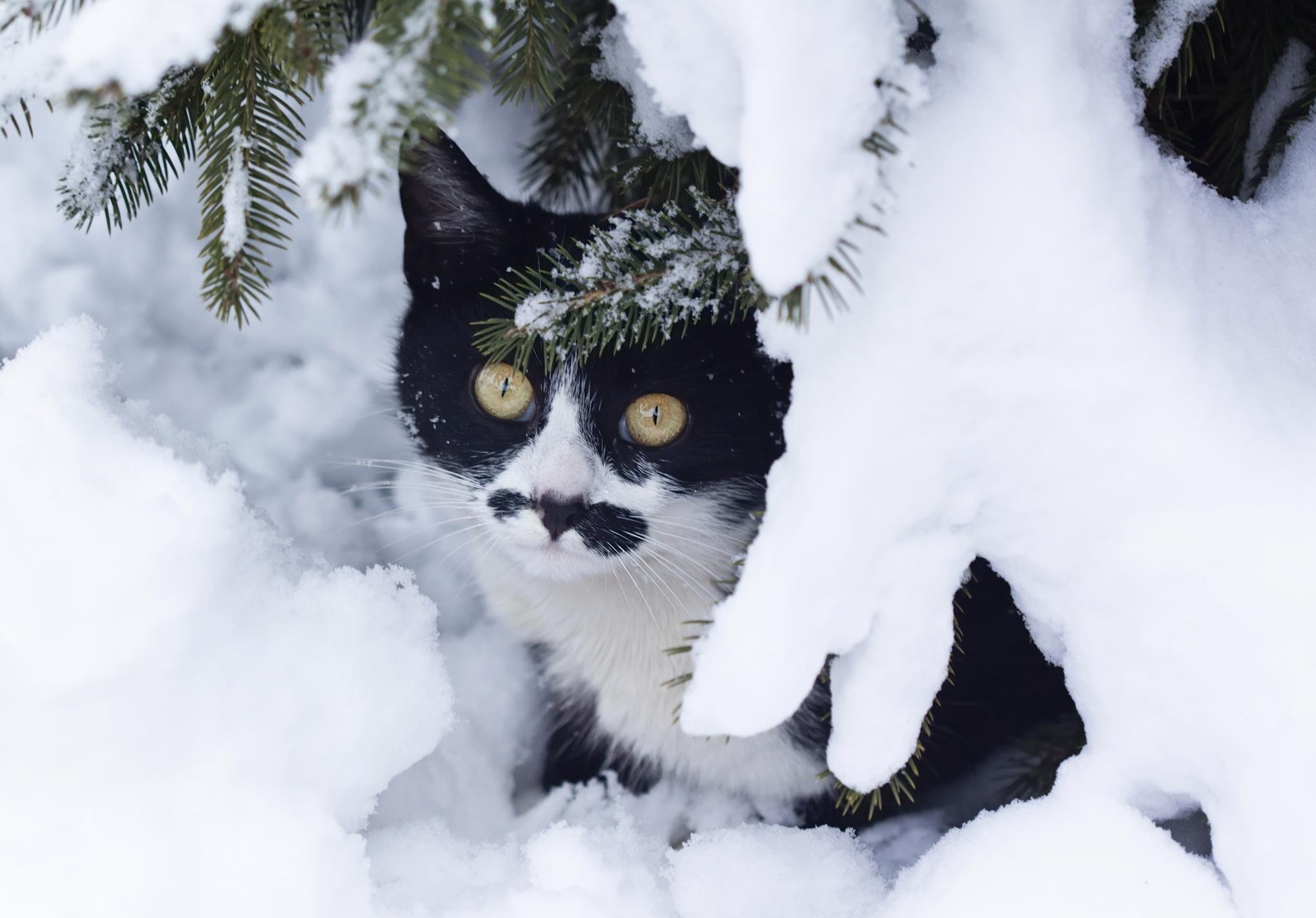 пэкхам картинки на рабочий стол зима котики в снегу дпс