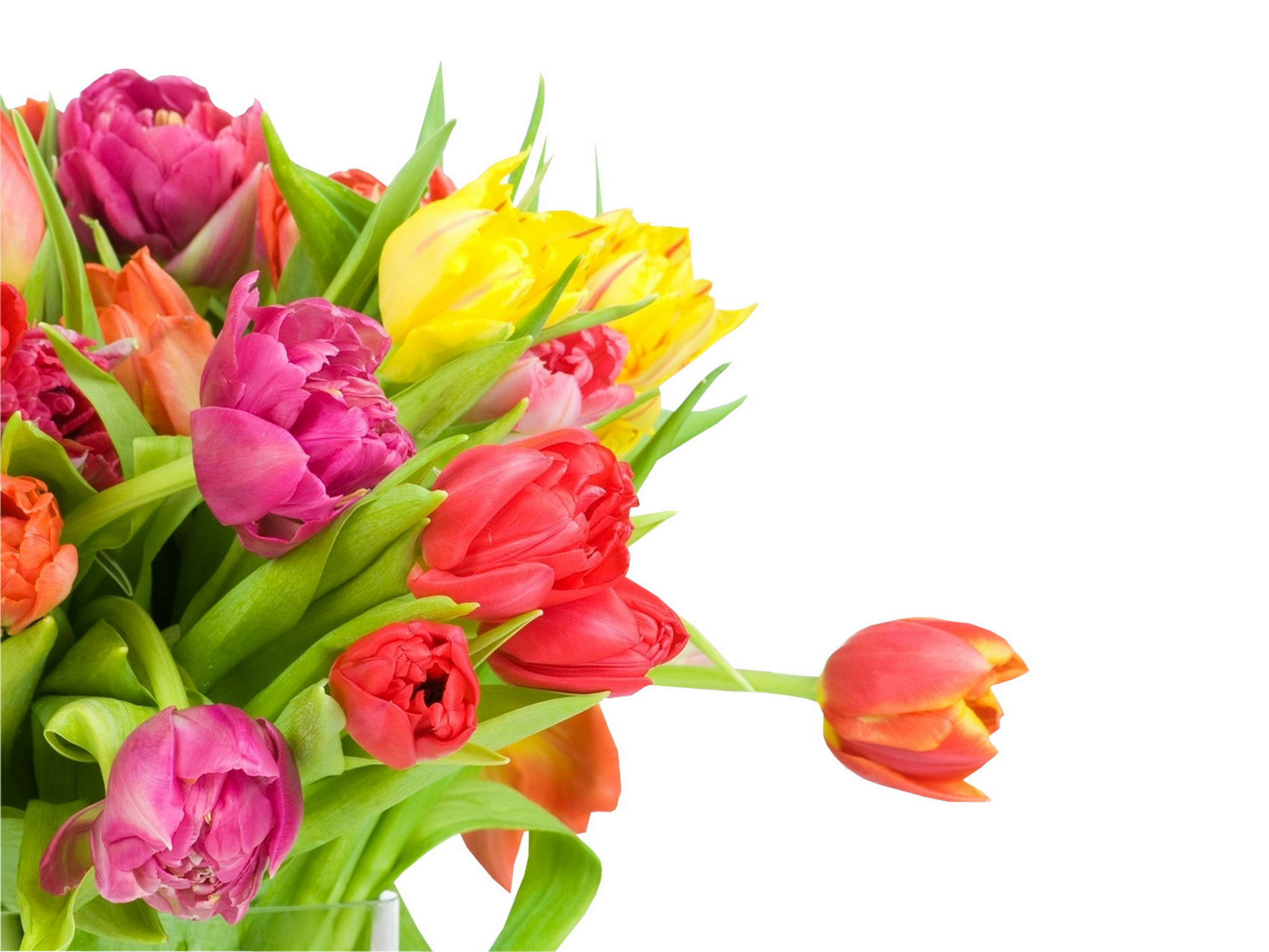 Открытки, цветок в центре открытки