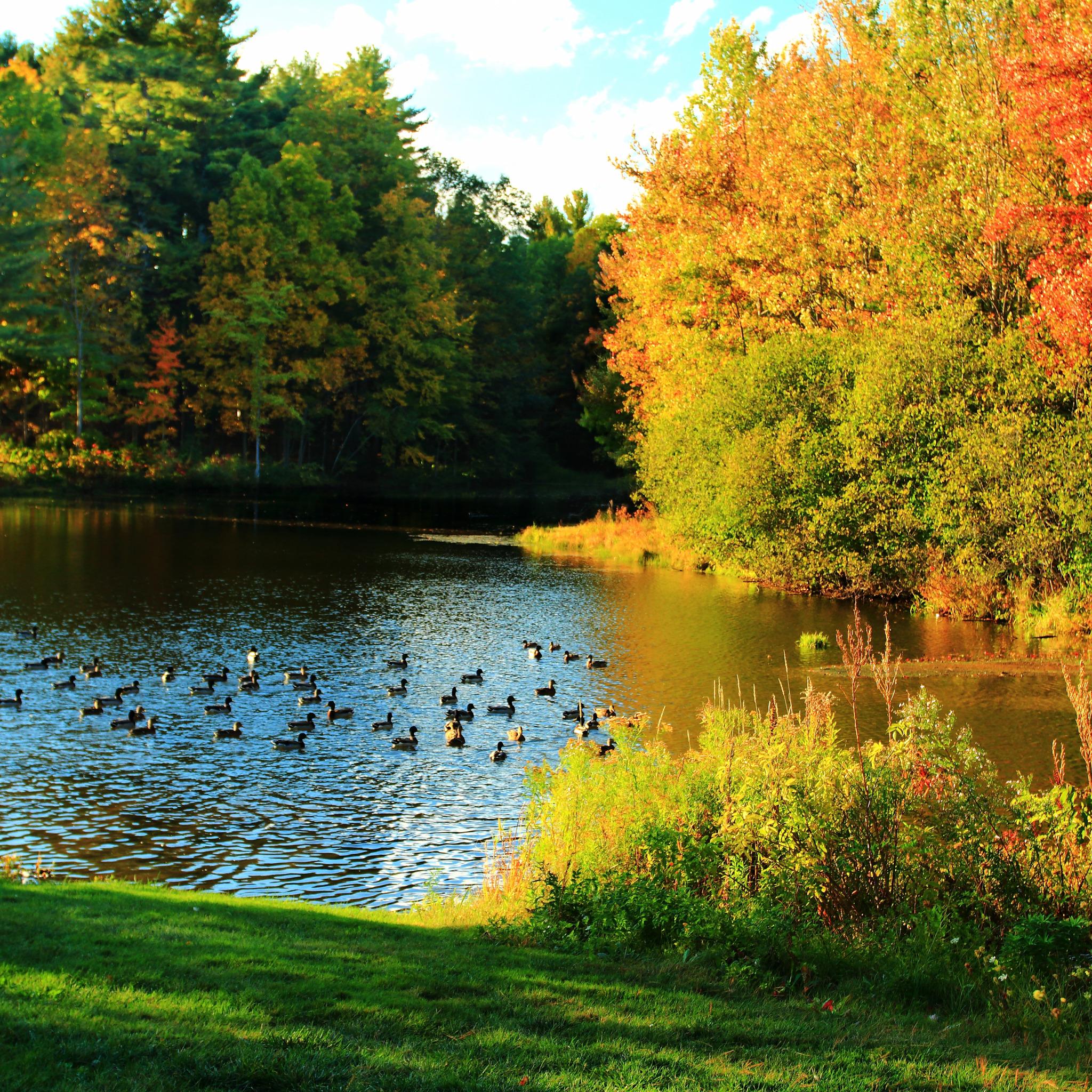 Осень на пруду картинки
