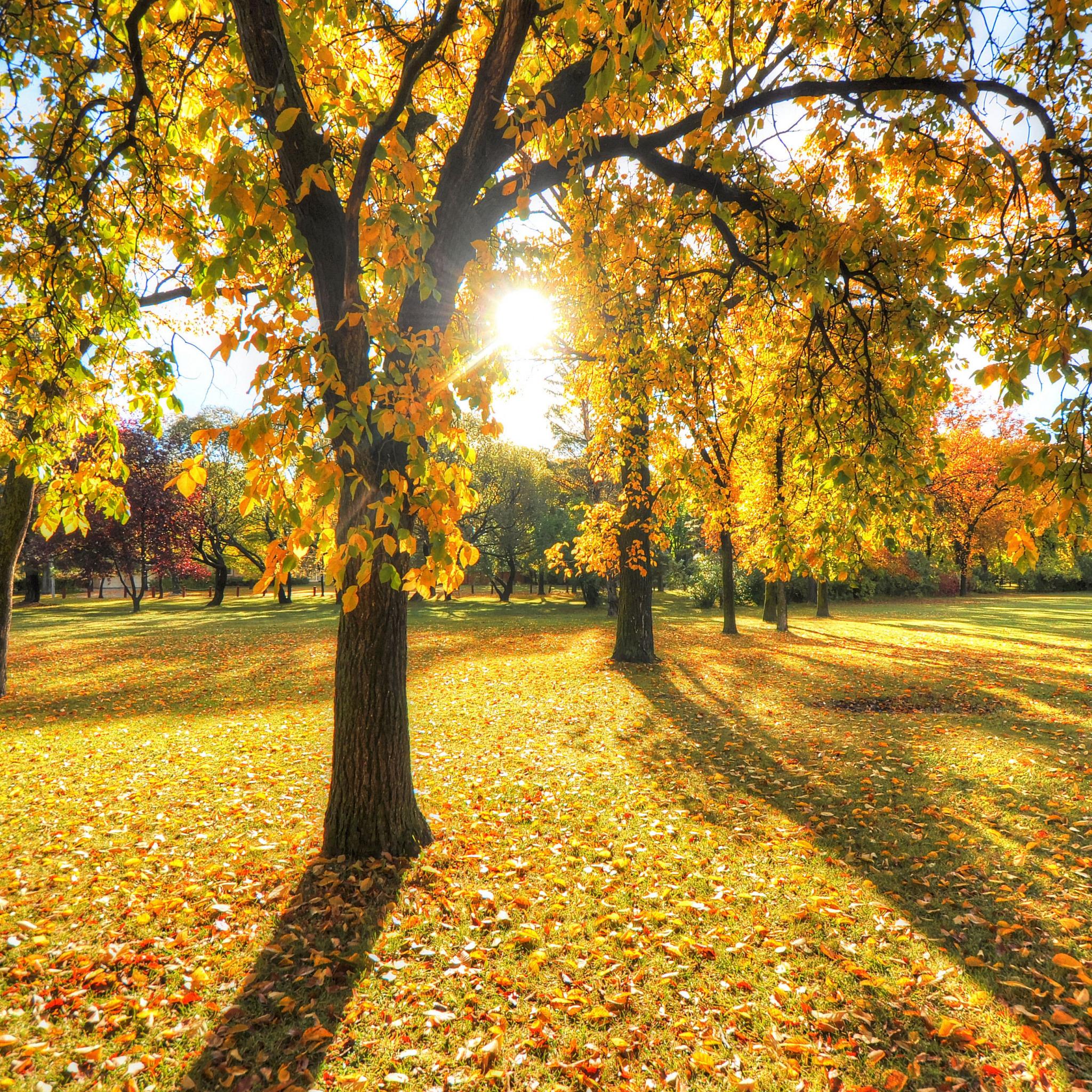 фото на айфон осень парк отцовской линии