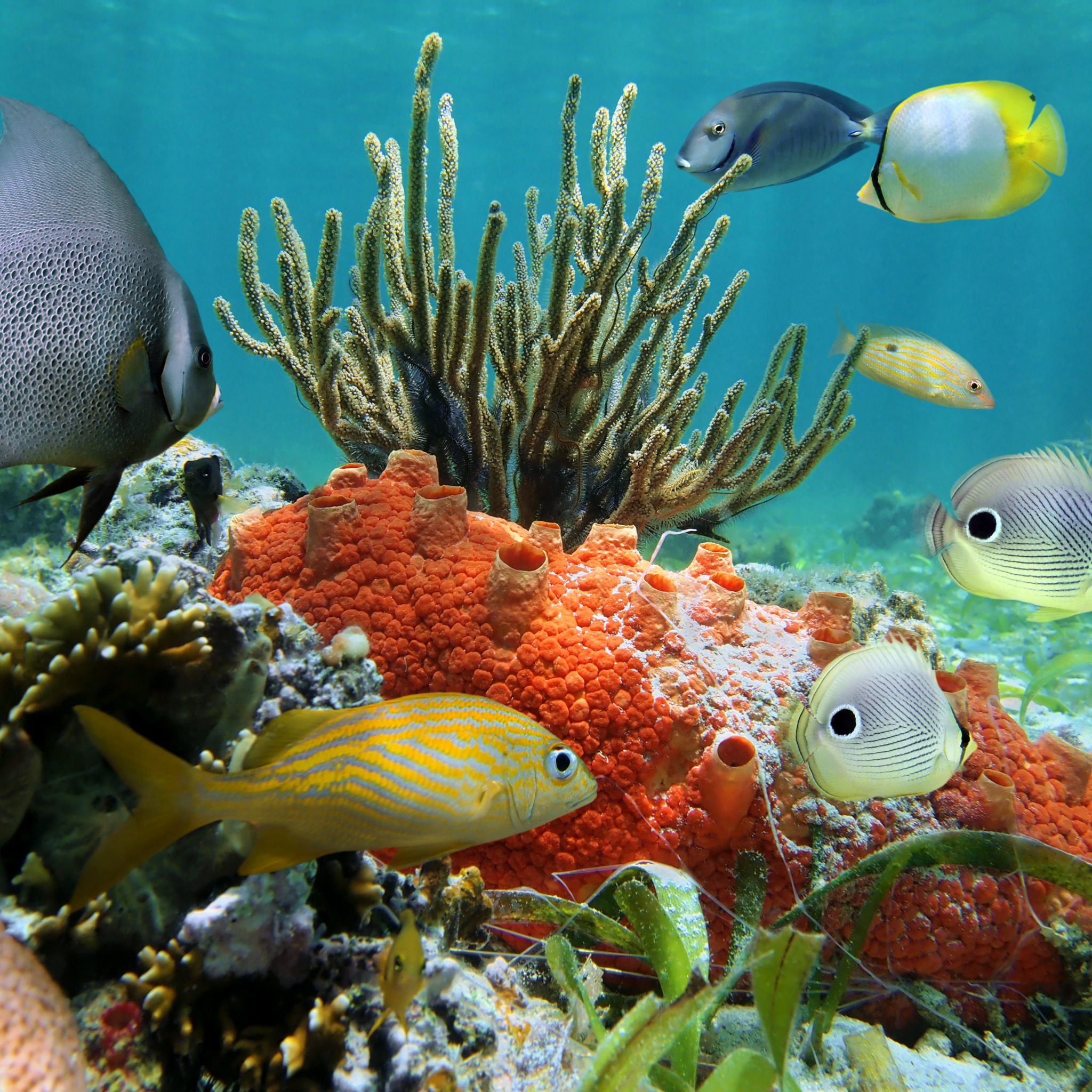 Картинки океанов мира
