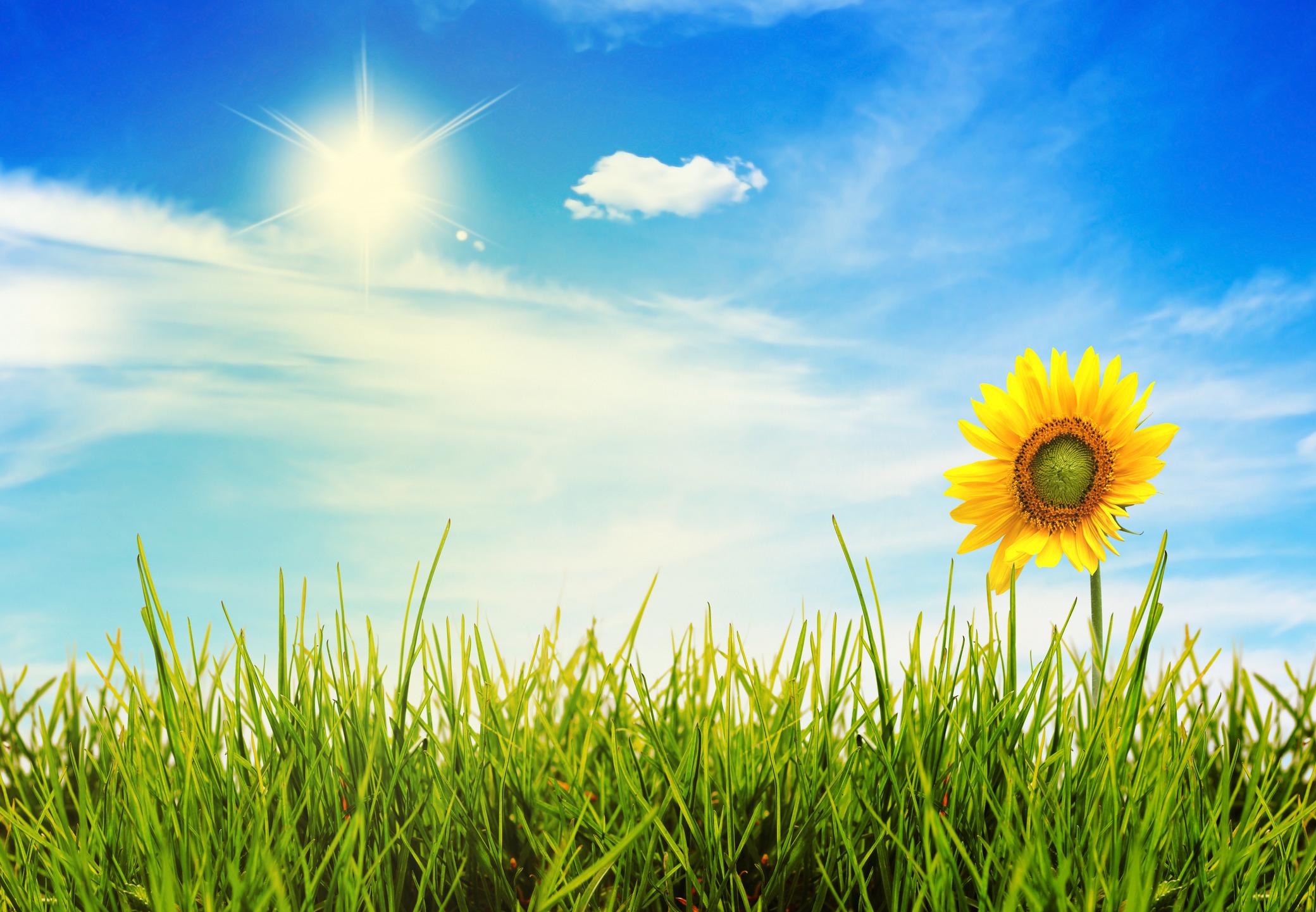 яркие солнечные картинки на рабочий стол комнаты благодаря большому