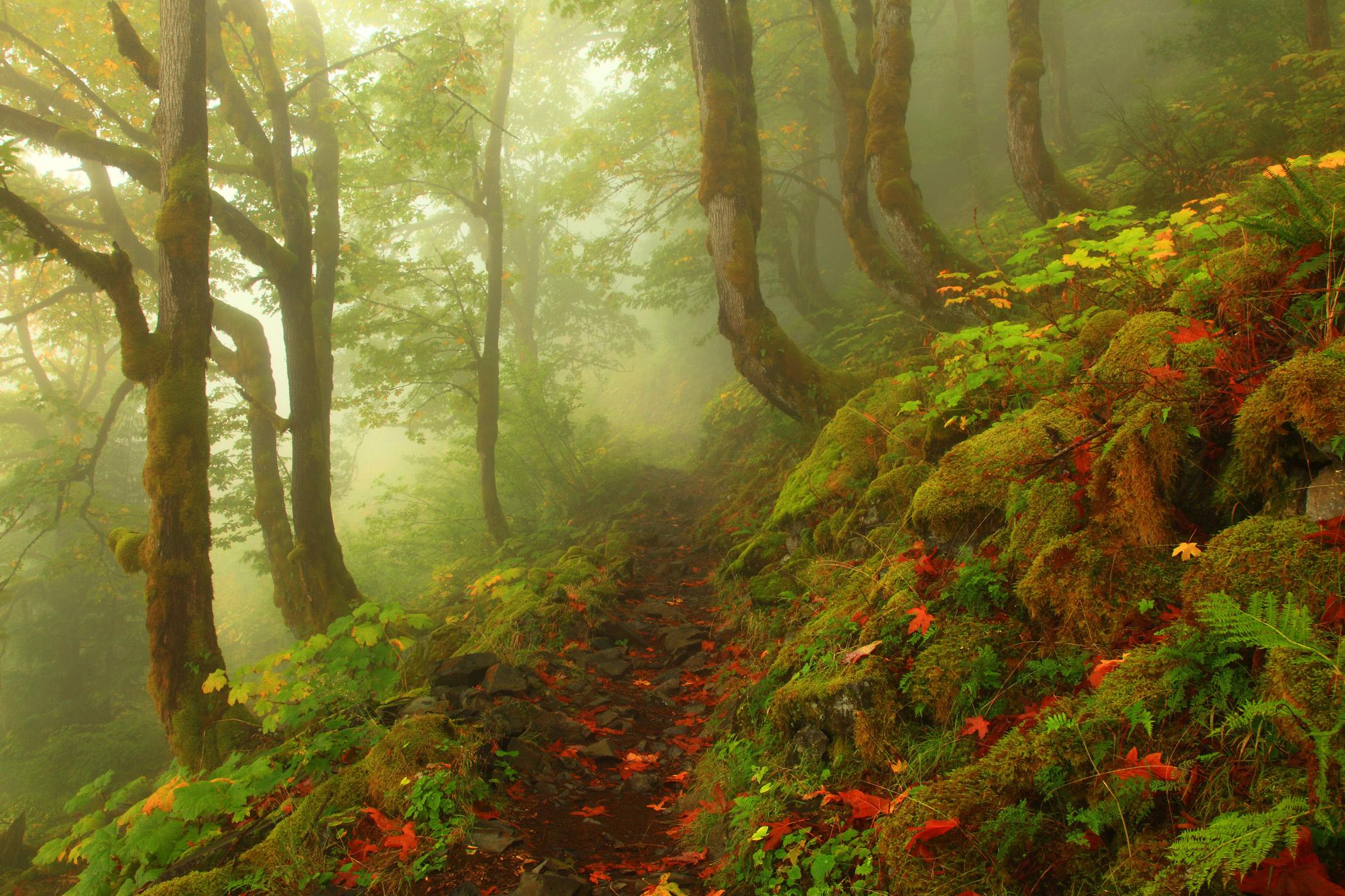 теннисную сказочный лес фотографии обилие совершенно