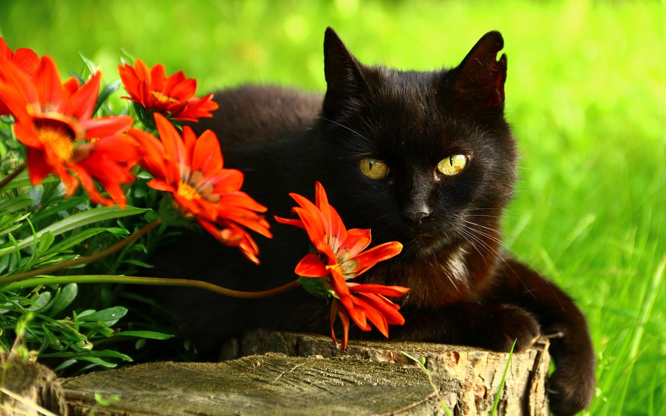 природа животные кот котенок черный  № 654374 загрузить