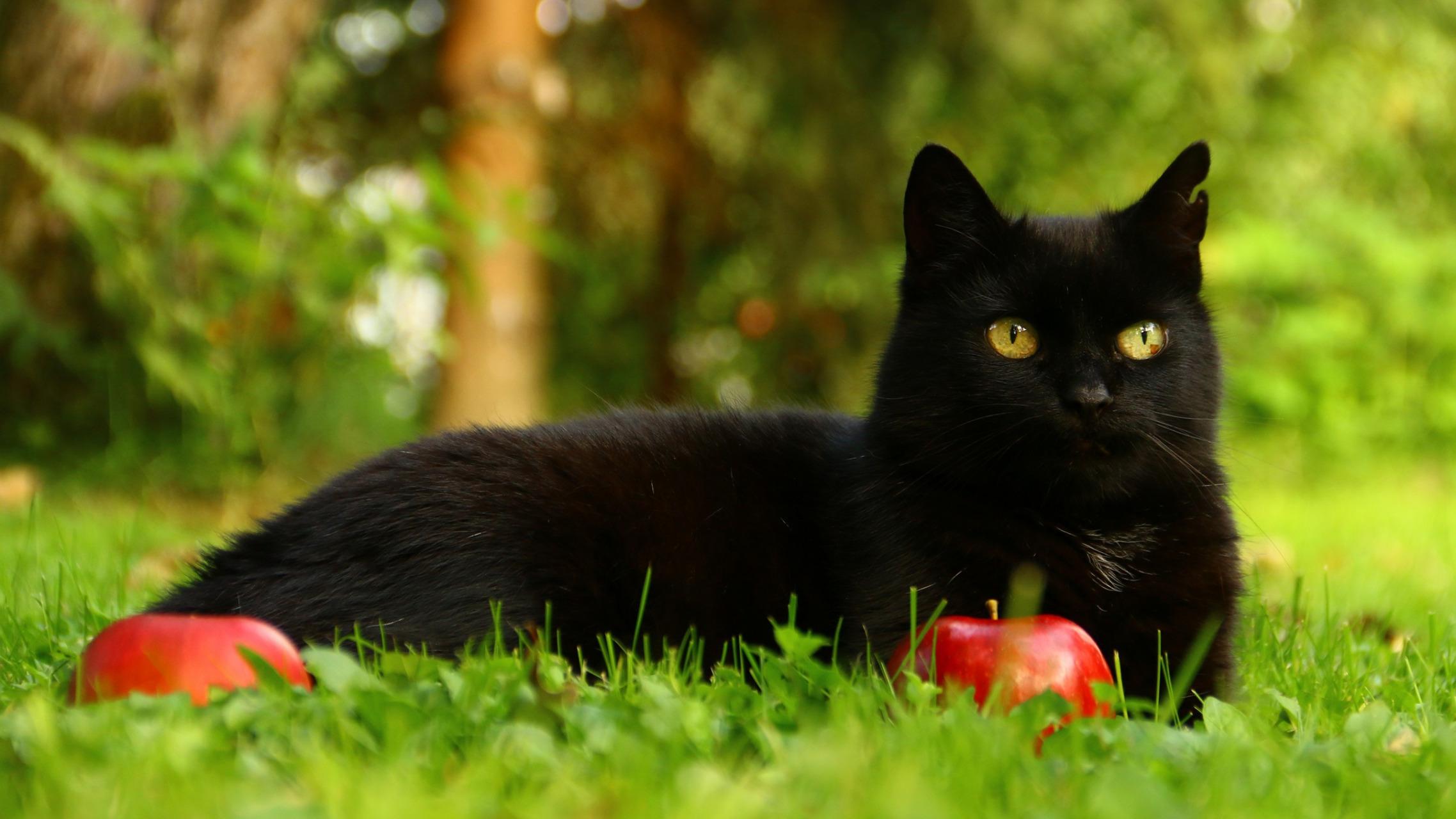 природа животные кот котенок черный  № 654358 бесплатно