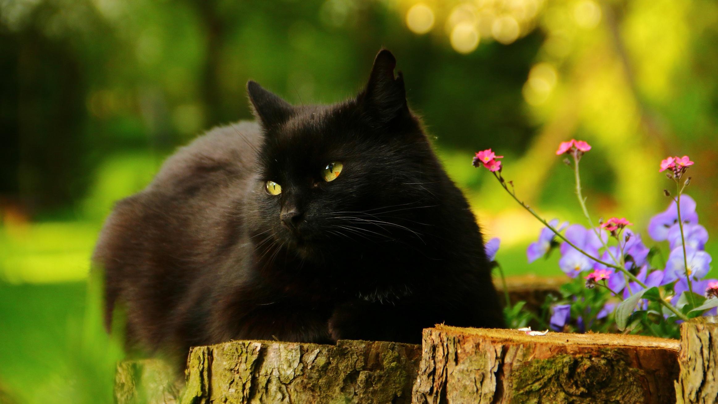 природа животные кот котенок черный  № 654366  скачать