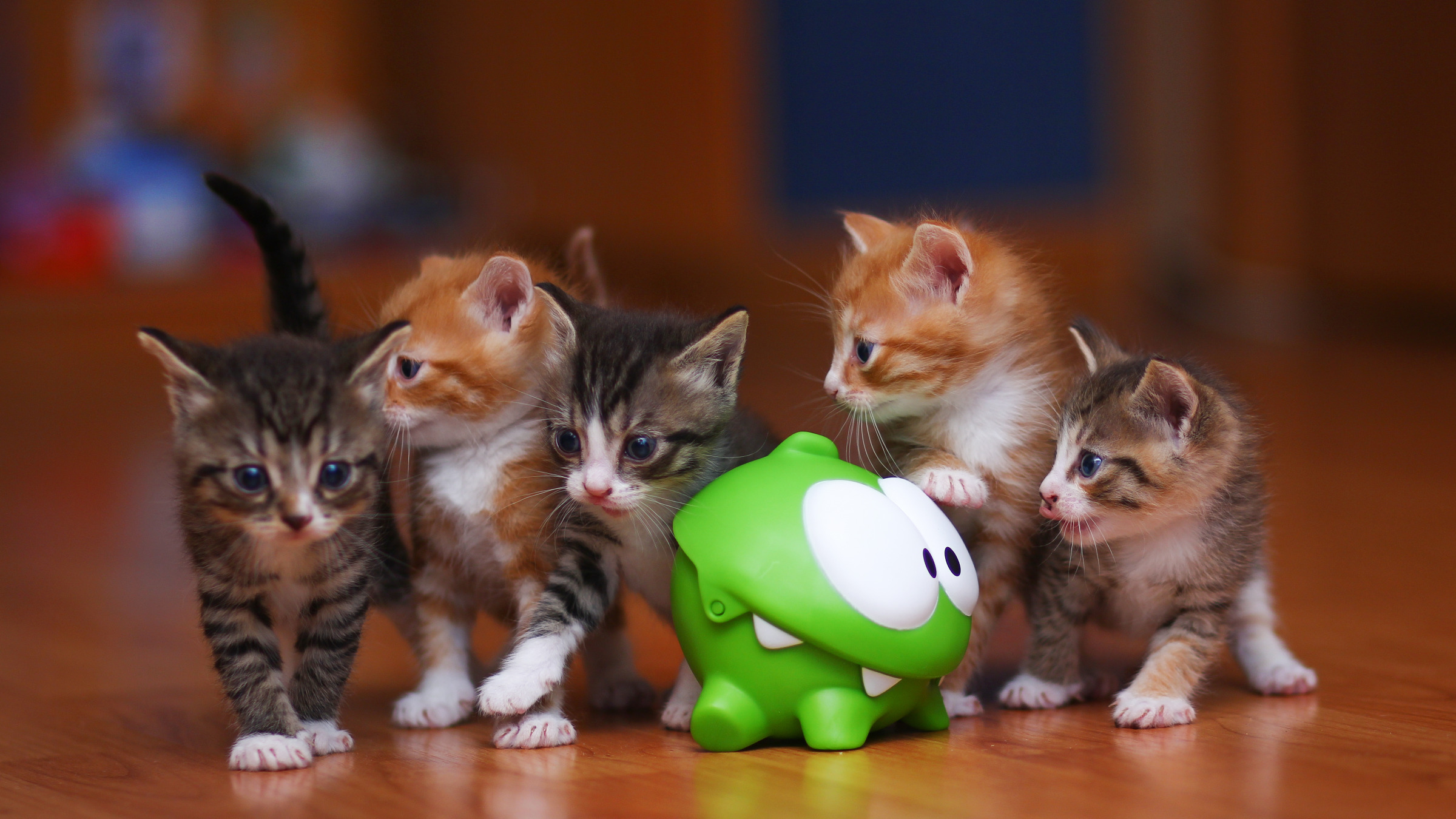 cat with baby kittens toys